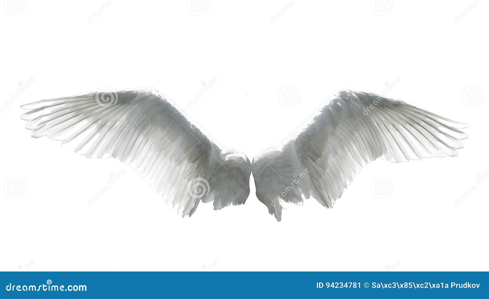 Aniołów skrzydła odizolowywający na bielu