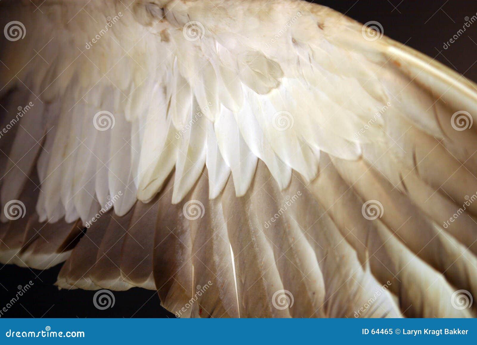 Anioł pod skrzydła ptasich piór