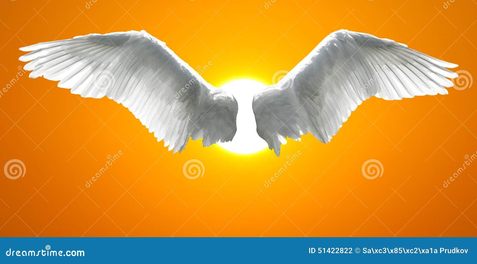 Anioł uskrzydla z tłem robić zmierzchu niebo