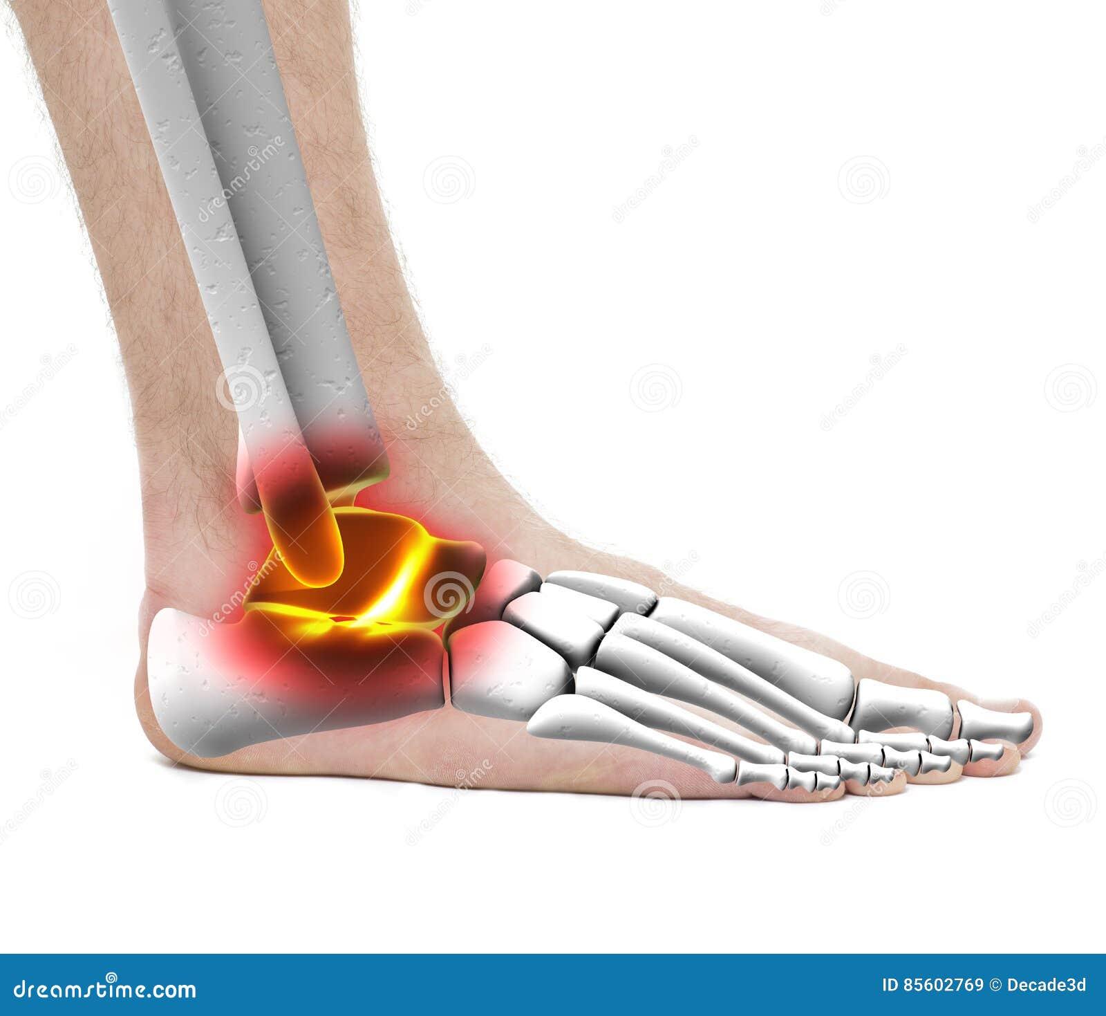 Ankle Pain Injury Anatomy Male Studio Photo Isolated On Whit