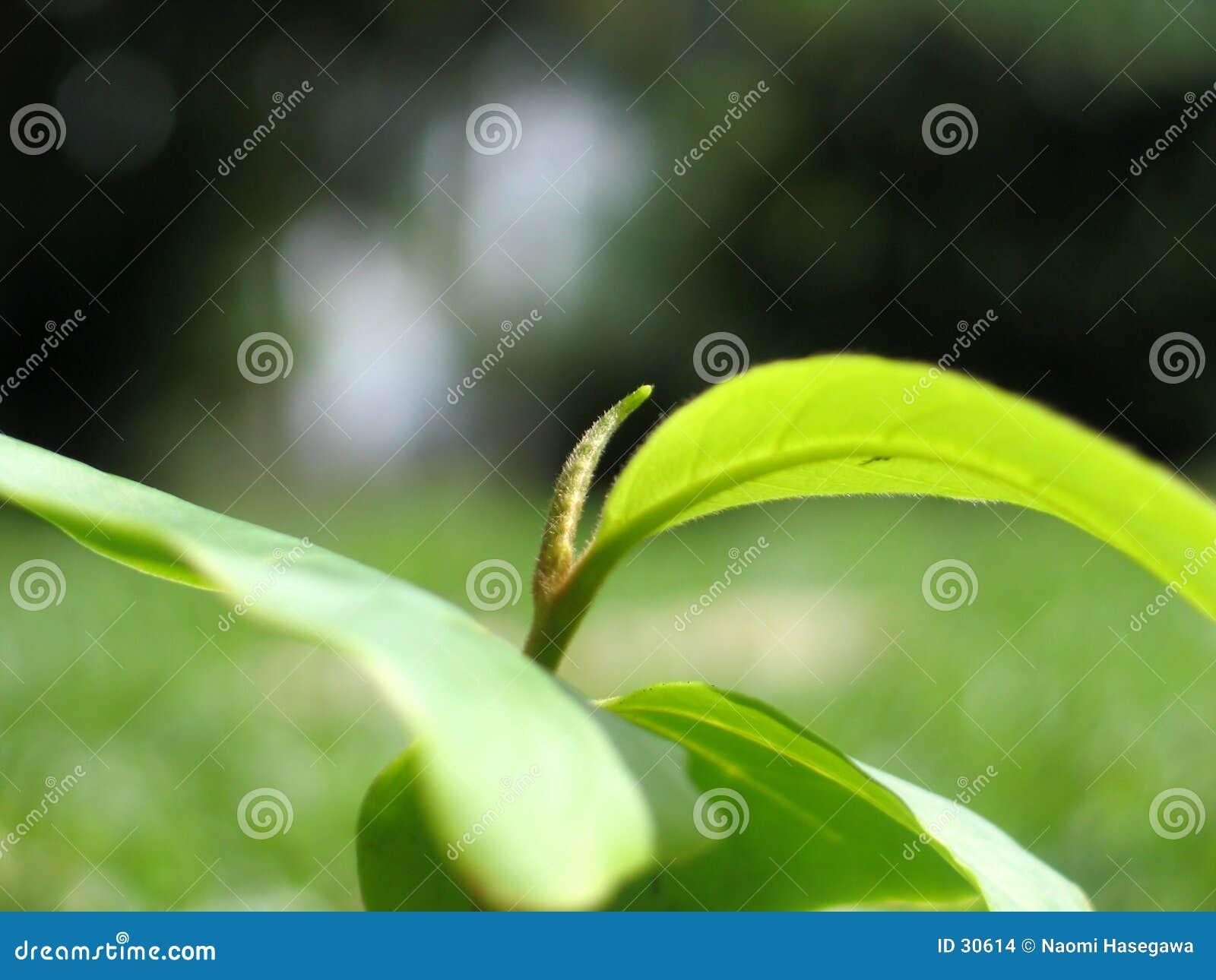 Download Anlage stockfoto. Bild von frech, blatt, grün, blätter, betrieb - 30614