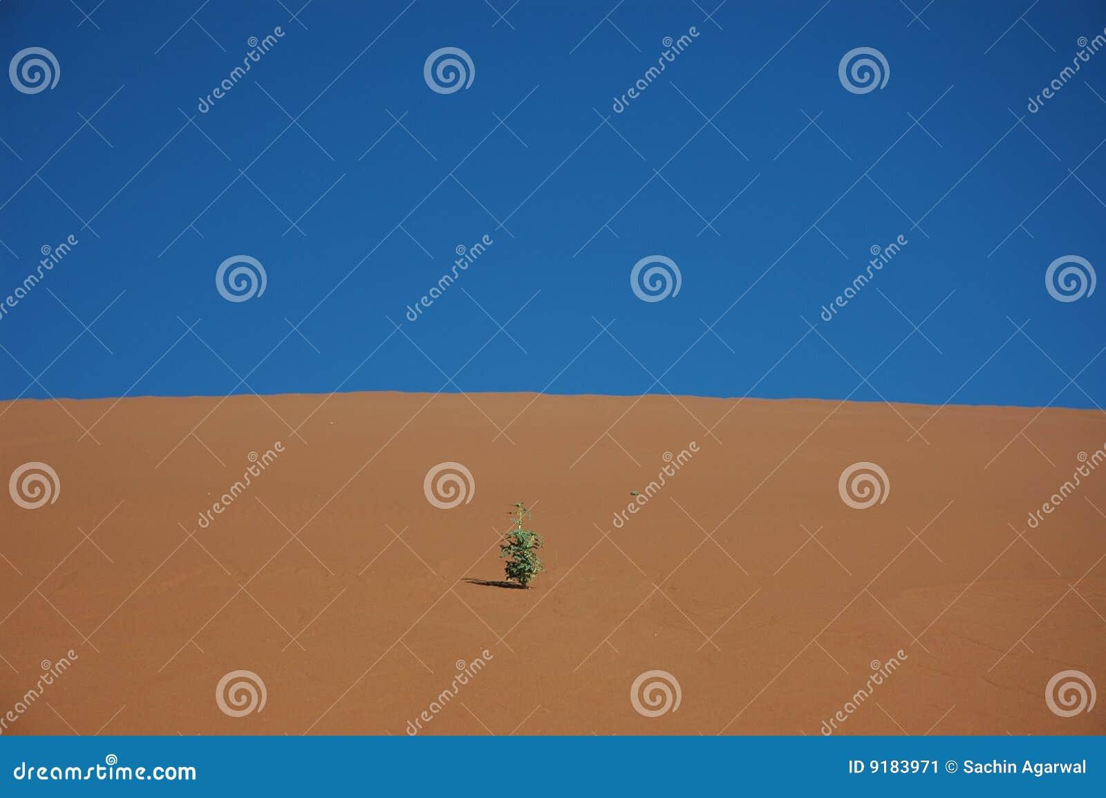 Anlage auf Sanddüne