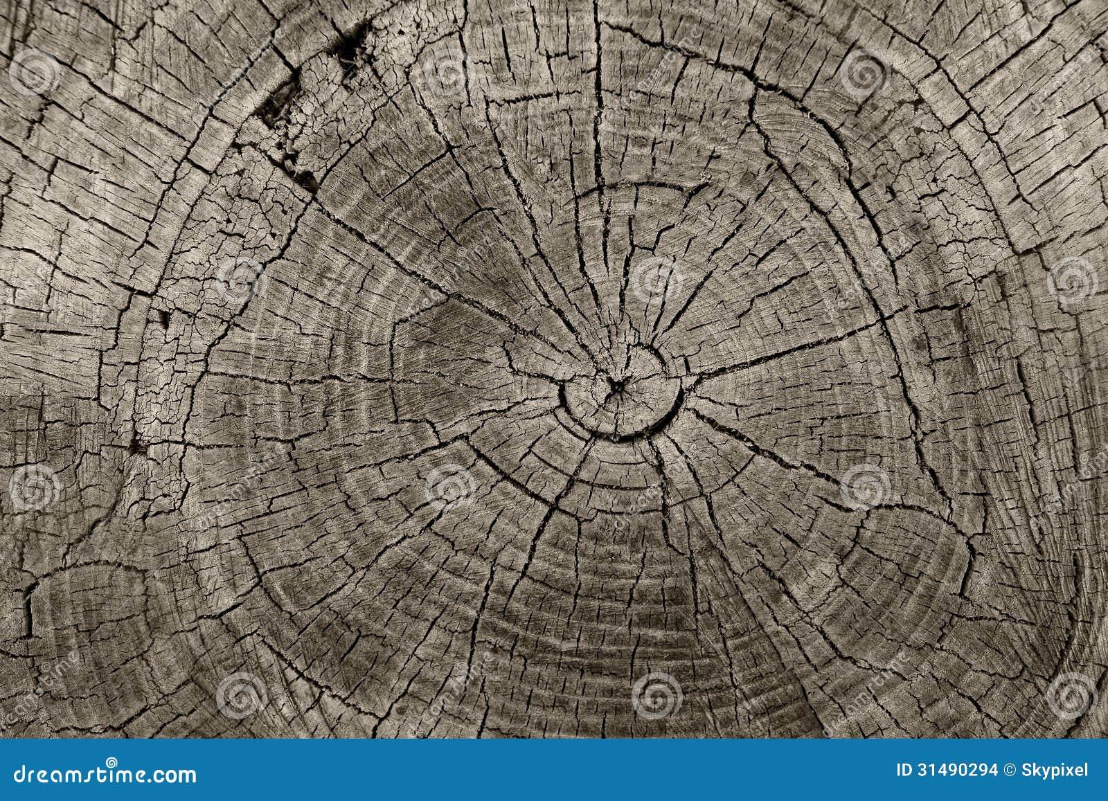 Anneaux d arbre