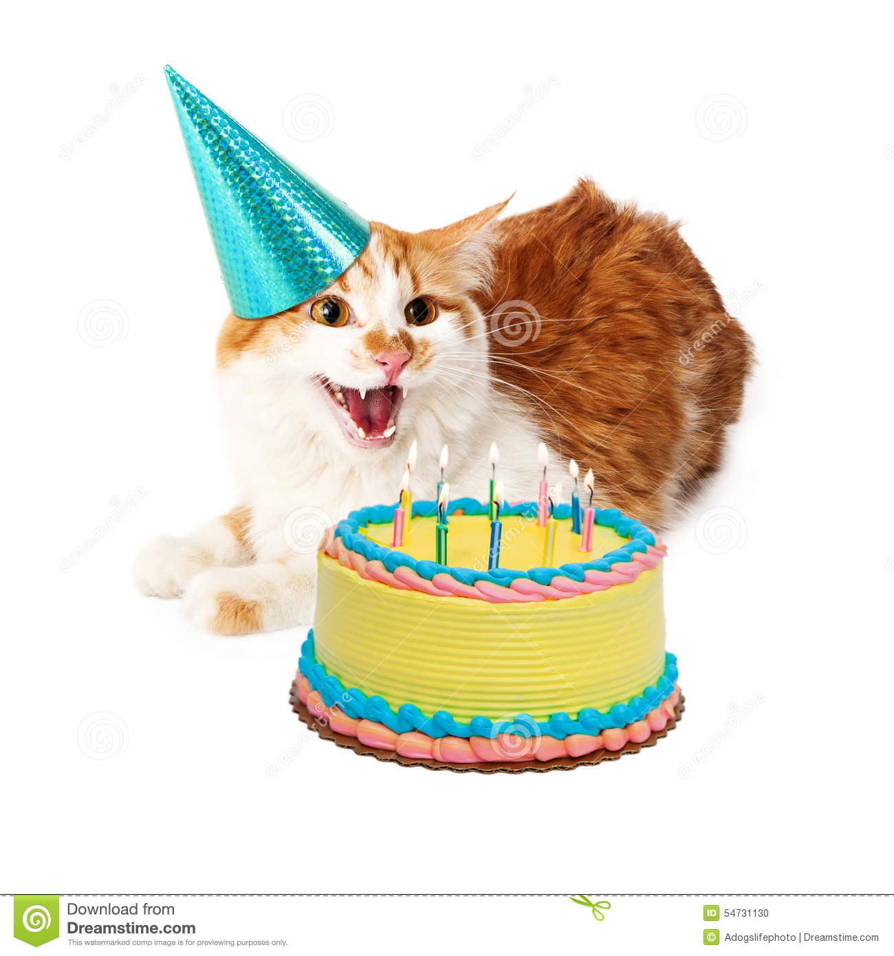 Anniversaire fol drôle Cat With Cake