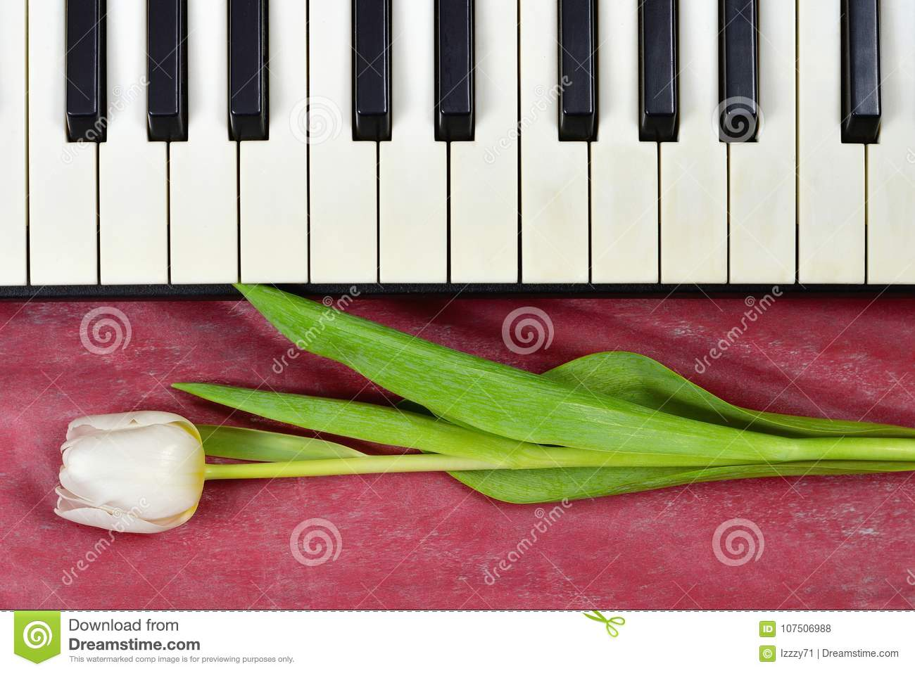 anniversary card with tulip and piano keyboard stock photo image