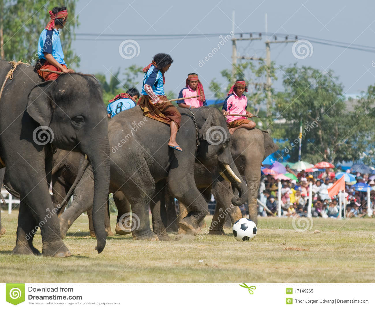 The Annual Elephant Roundup In Surin Thailand Editorial Image Image 17149965