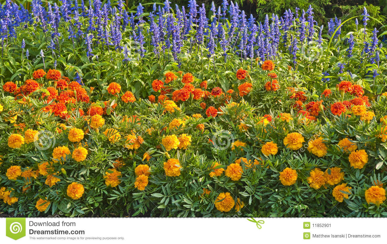 Annual Flowers Stock Image - Image: 11852901