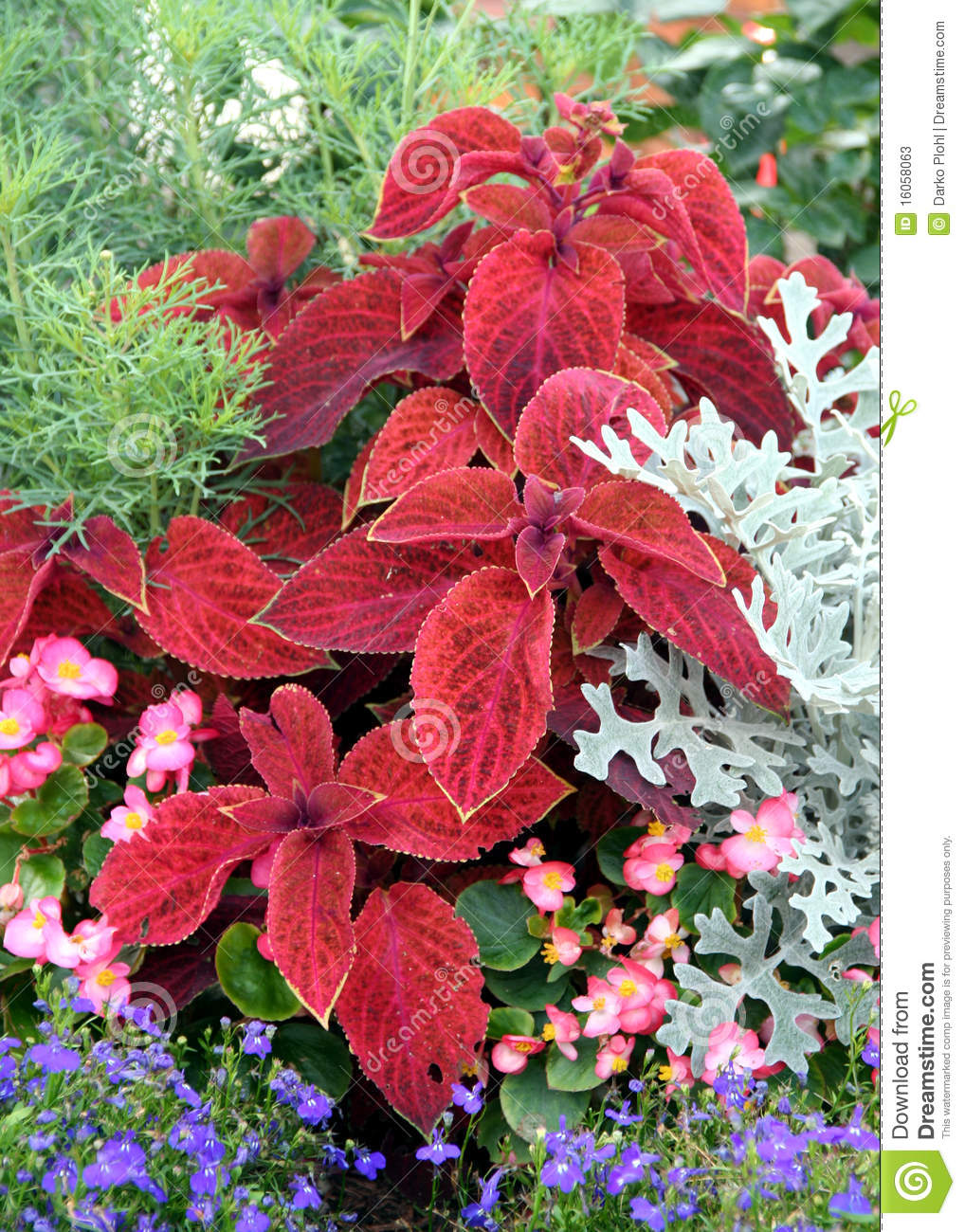 Annual Flowers Bed Stock Image Image Of Plant Blooming 16058063