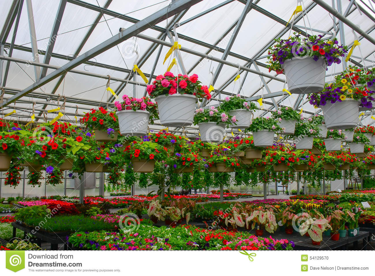 Flower Hanging Baskets Sale : Hanging baskets of flowers for sale in greenhouse stock