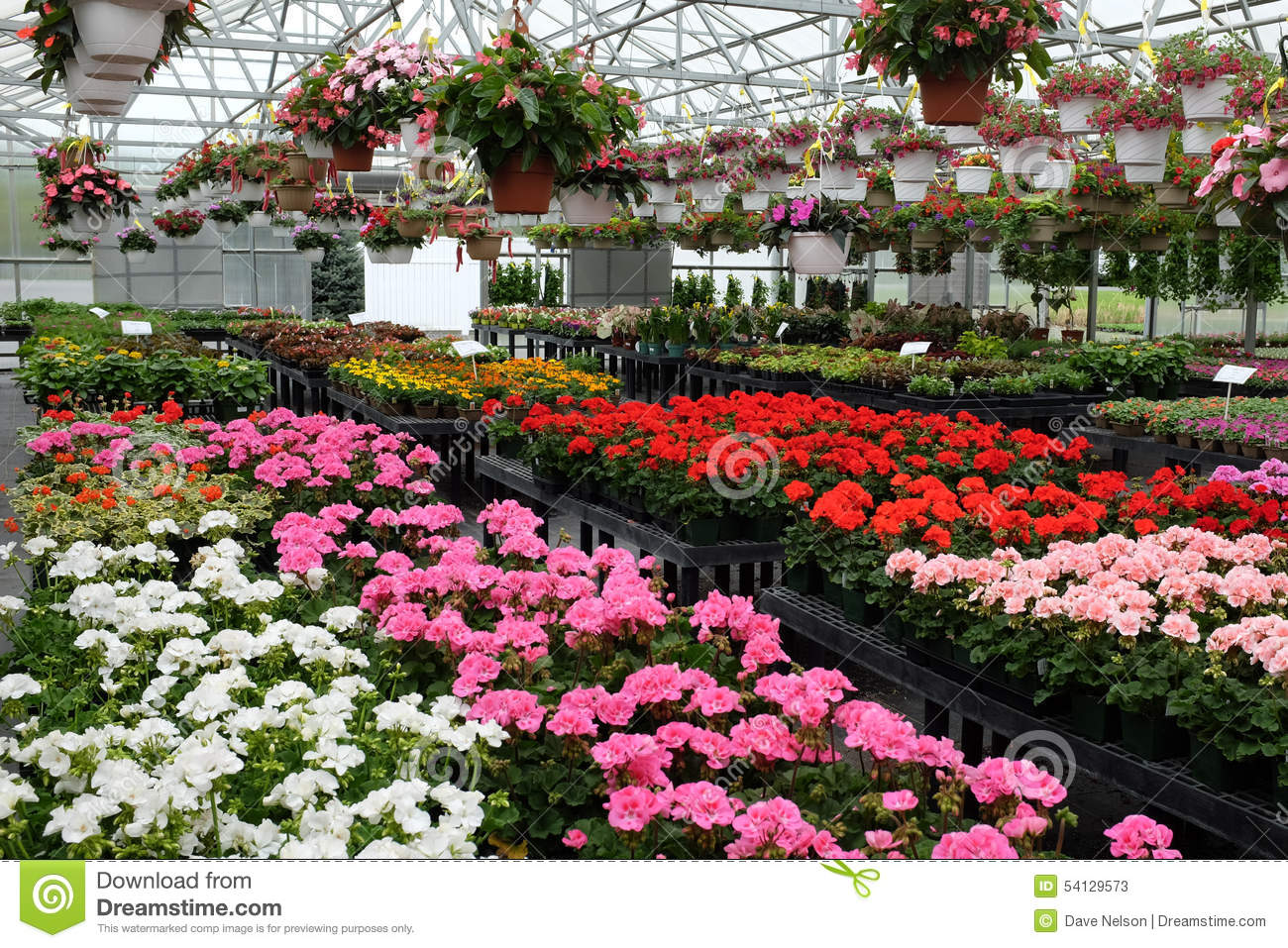 Colorful Flowers For Sale In Greenhouse Stock Image Image Of