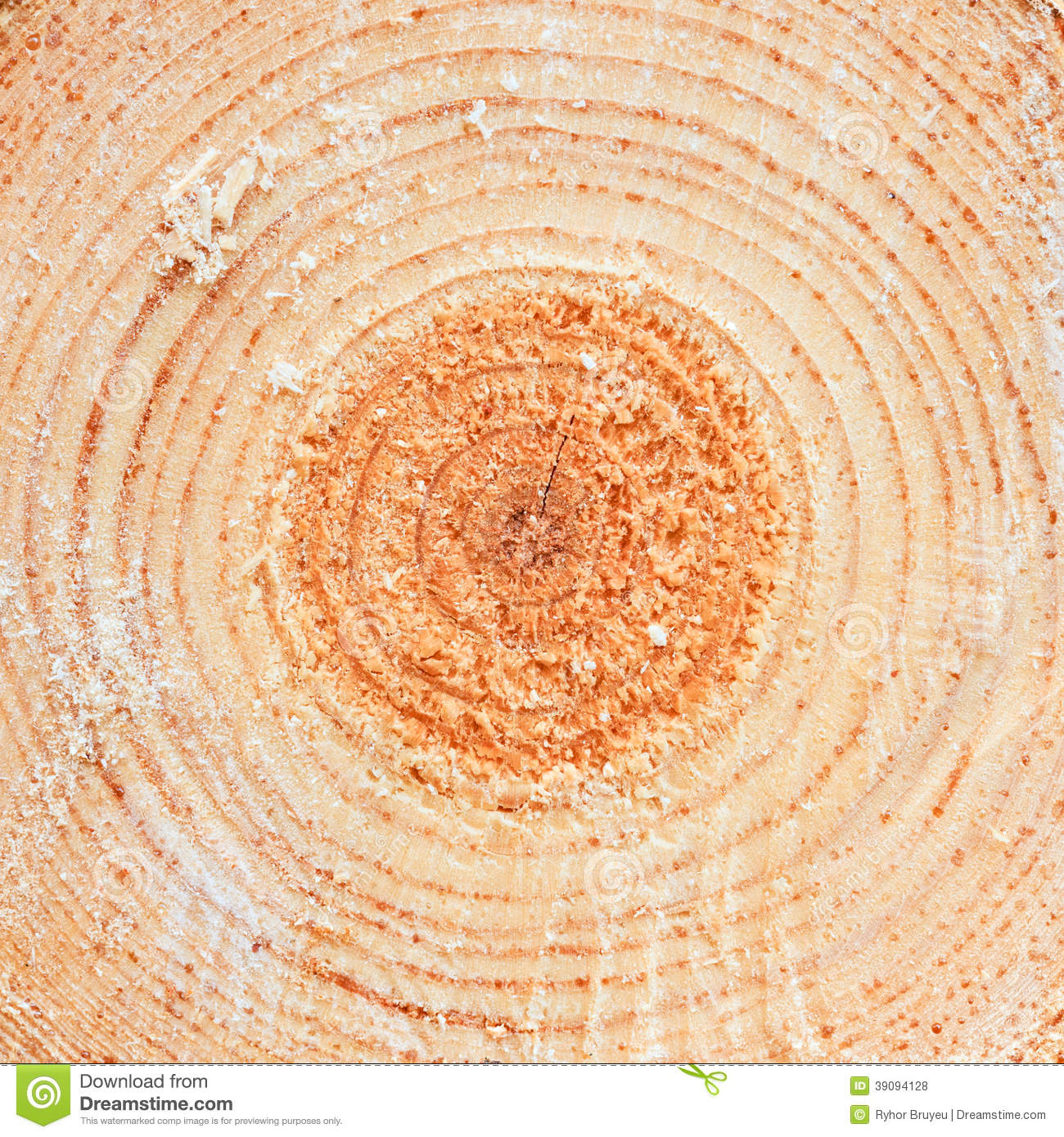 annual rings on sawn pine tree timber wood stock photo