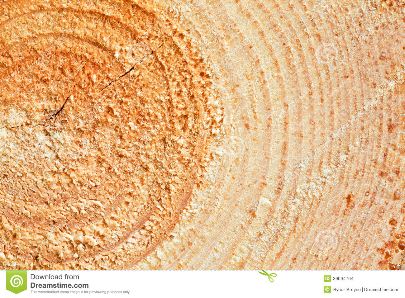 Annual Rings On Sawn Pine Tree Wood Stock Photo Image