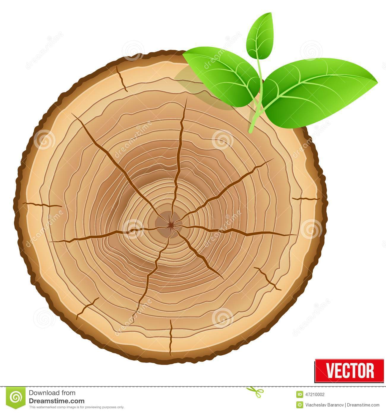 Annual Tree Growth Rings Of The Cross section Wood Stock