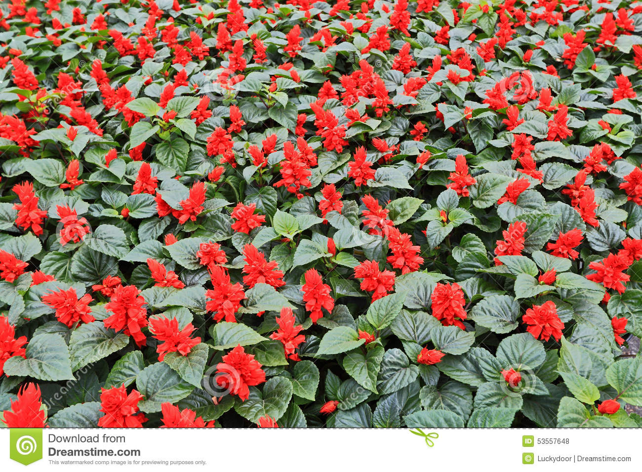 Annuals red flowers stock photo image of spring agriculture 53557648 annuals red flowers izmirmasajfo