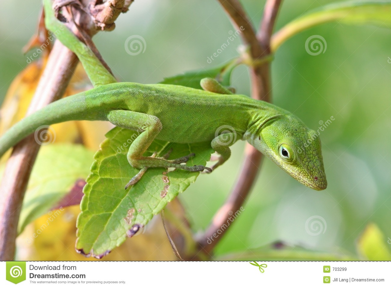 Anole green
