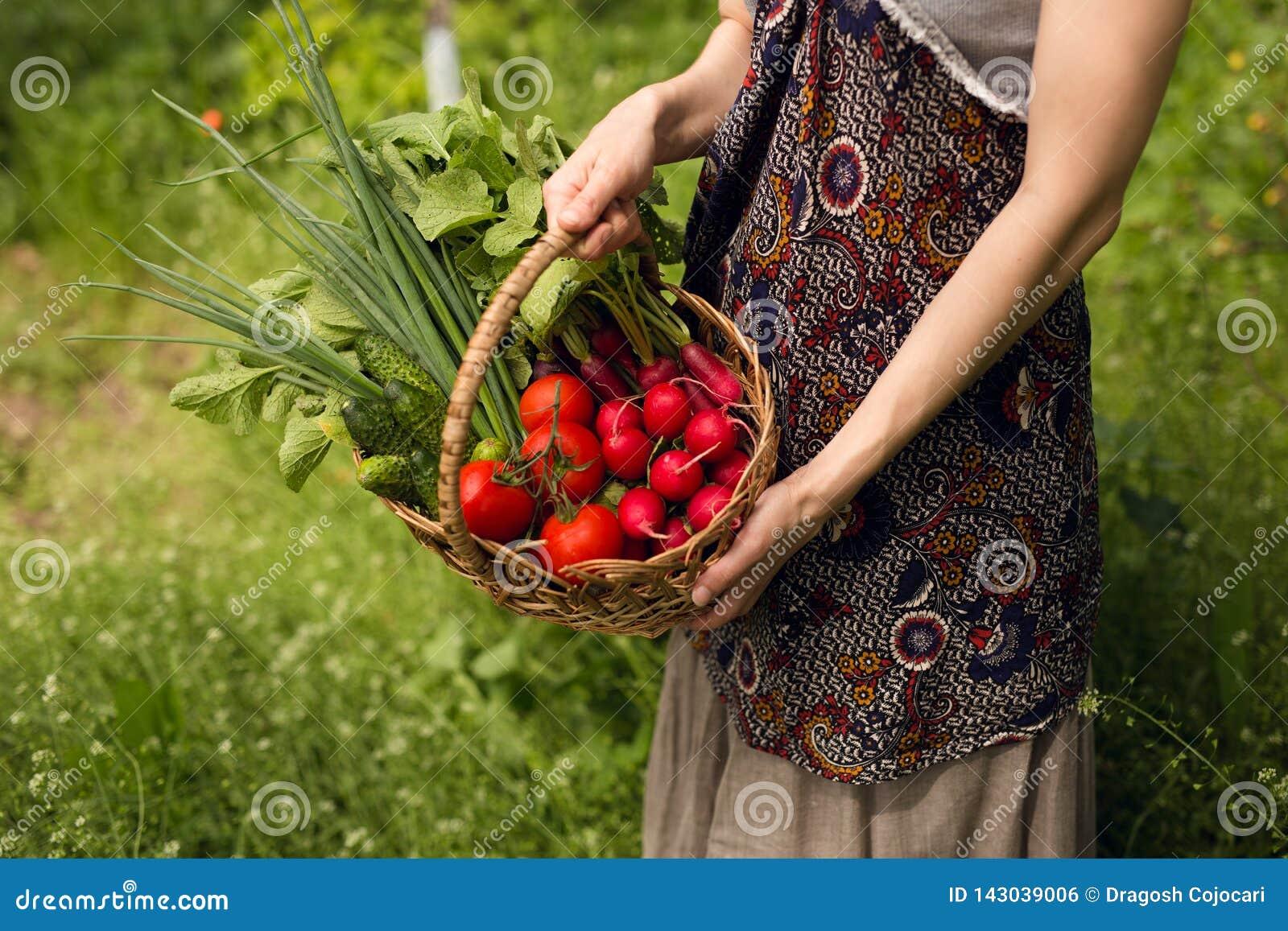 Anonumys-Frauen, die voll in den Händen einen Weidenkorb des Gemüses in seinem Garten halten Organic Nahrungsmittelkonzept