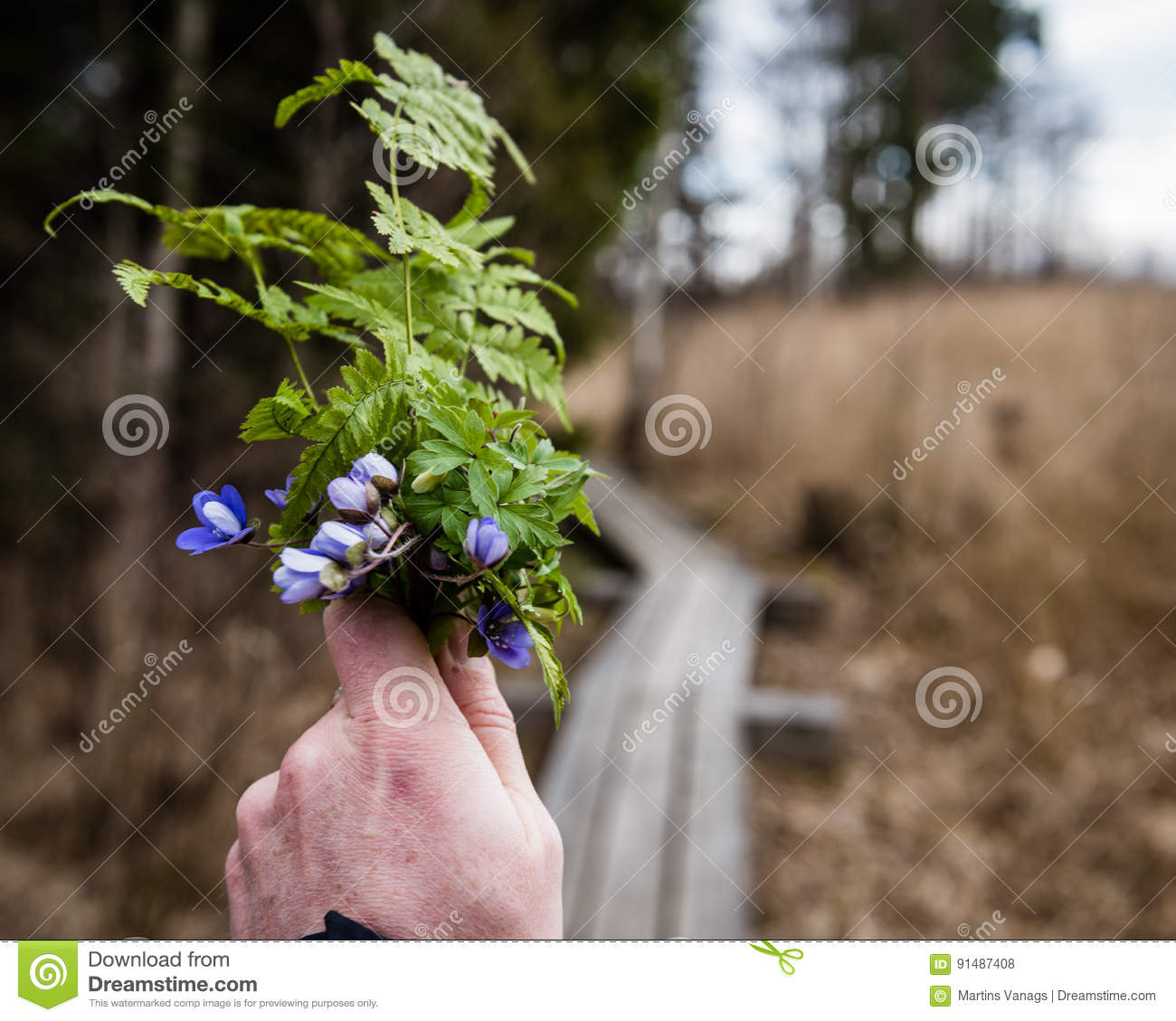 Anonymous Person Taking Pictures Of First Spring Flowers With Ph