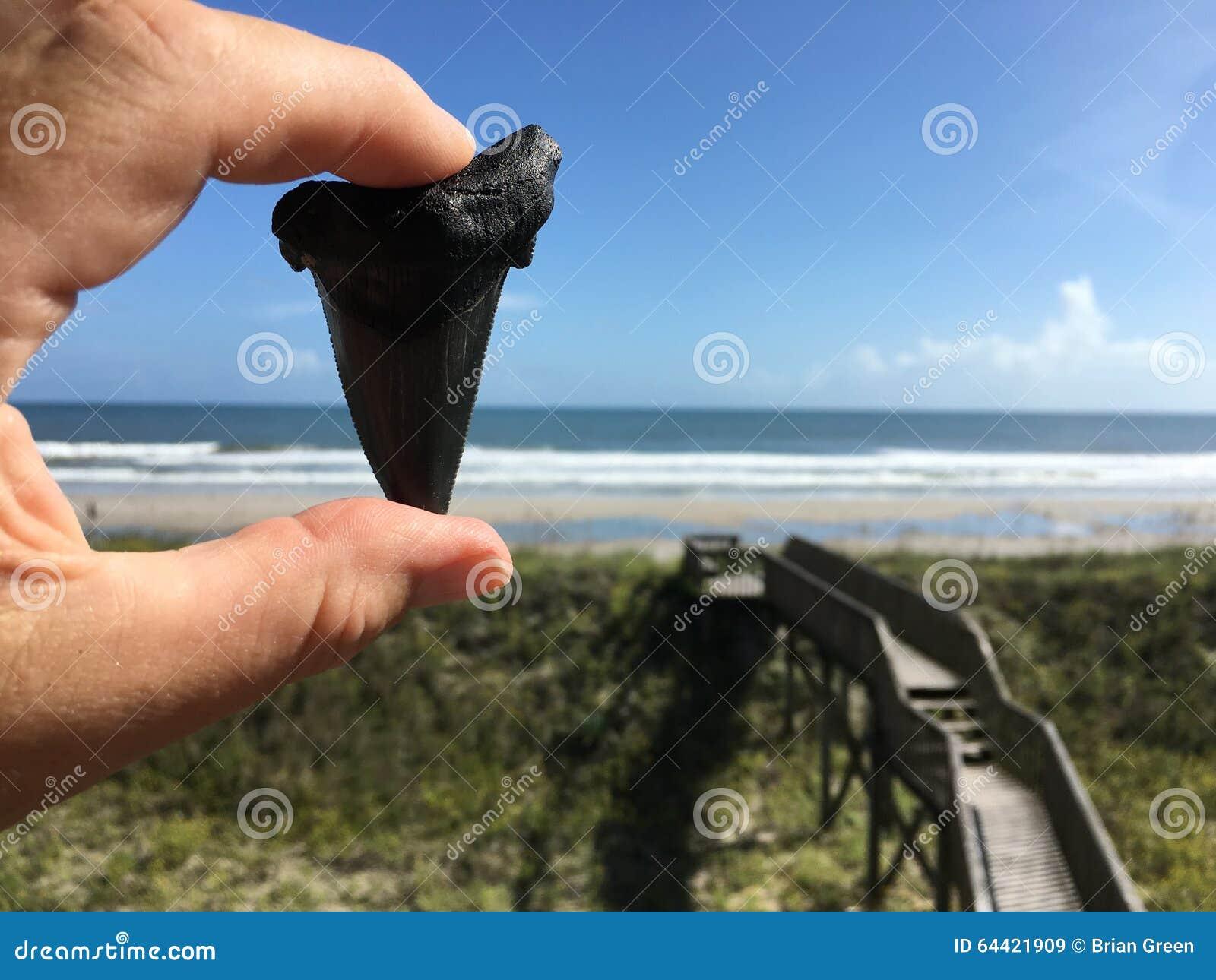 Shark Tooth Island North Carolina