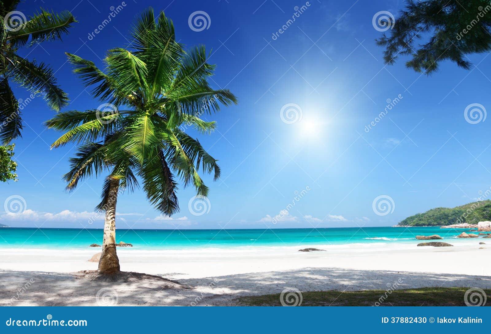 Anselazio het eiland van strandpraslin