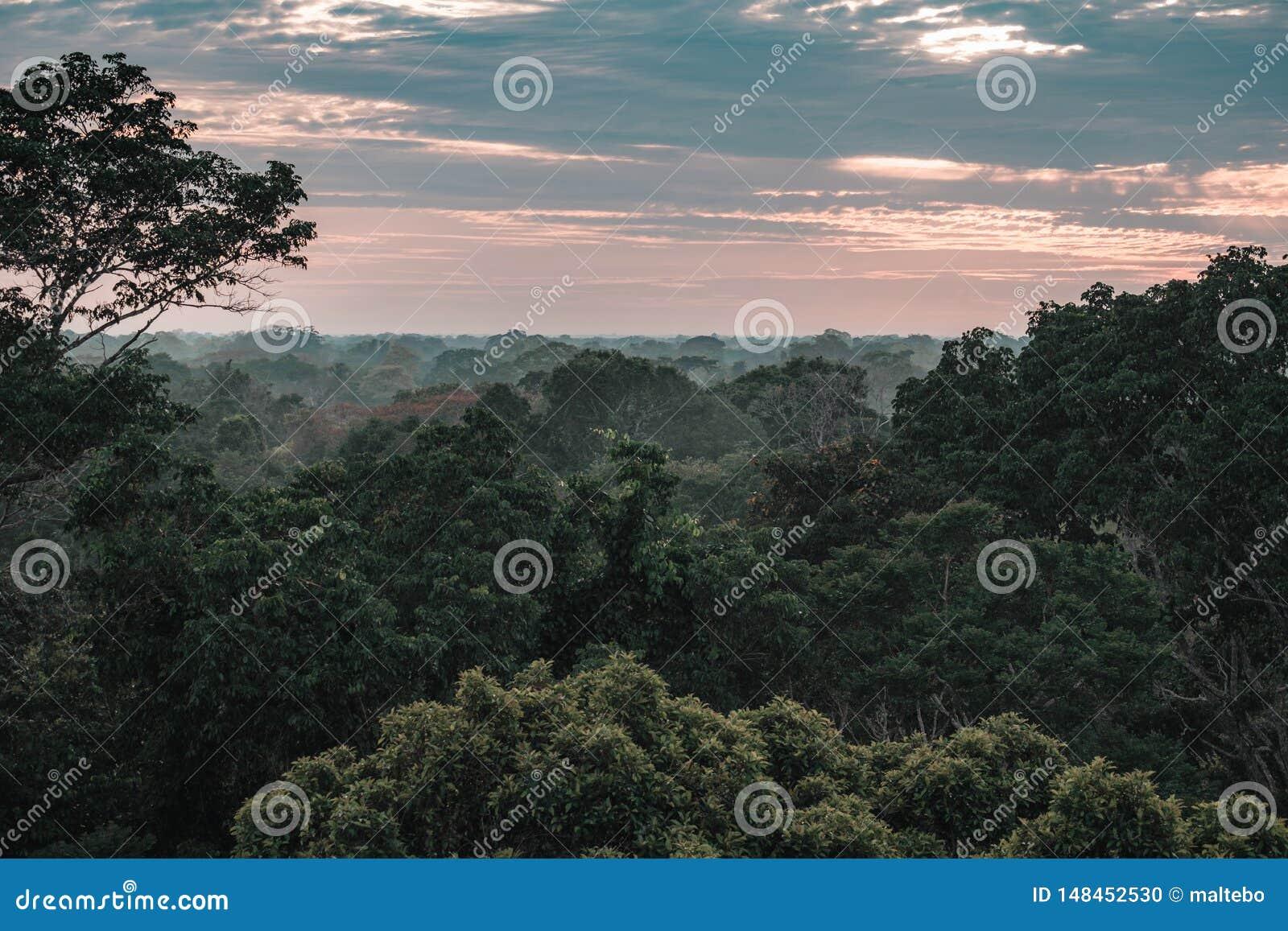 Ansicht über den Amazonas-Regenwald während des Sonnenuntergangs