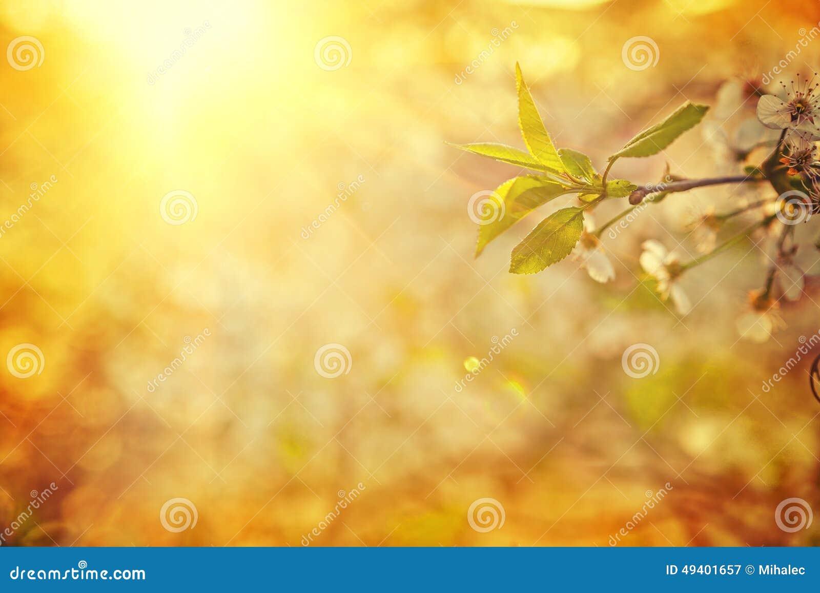 Download Ansicht über Die Blätter Des Blühenden Kirschbaums Verwischt Stockbild - Bild von jahreszeit, sonne: 49401657