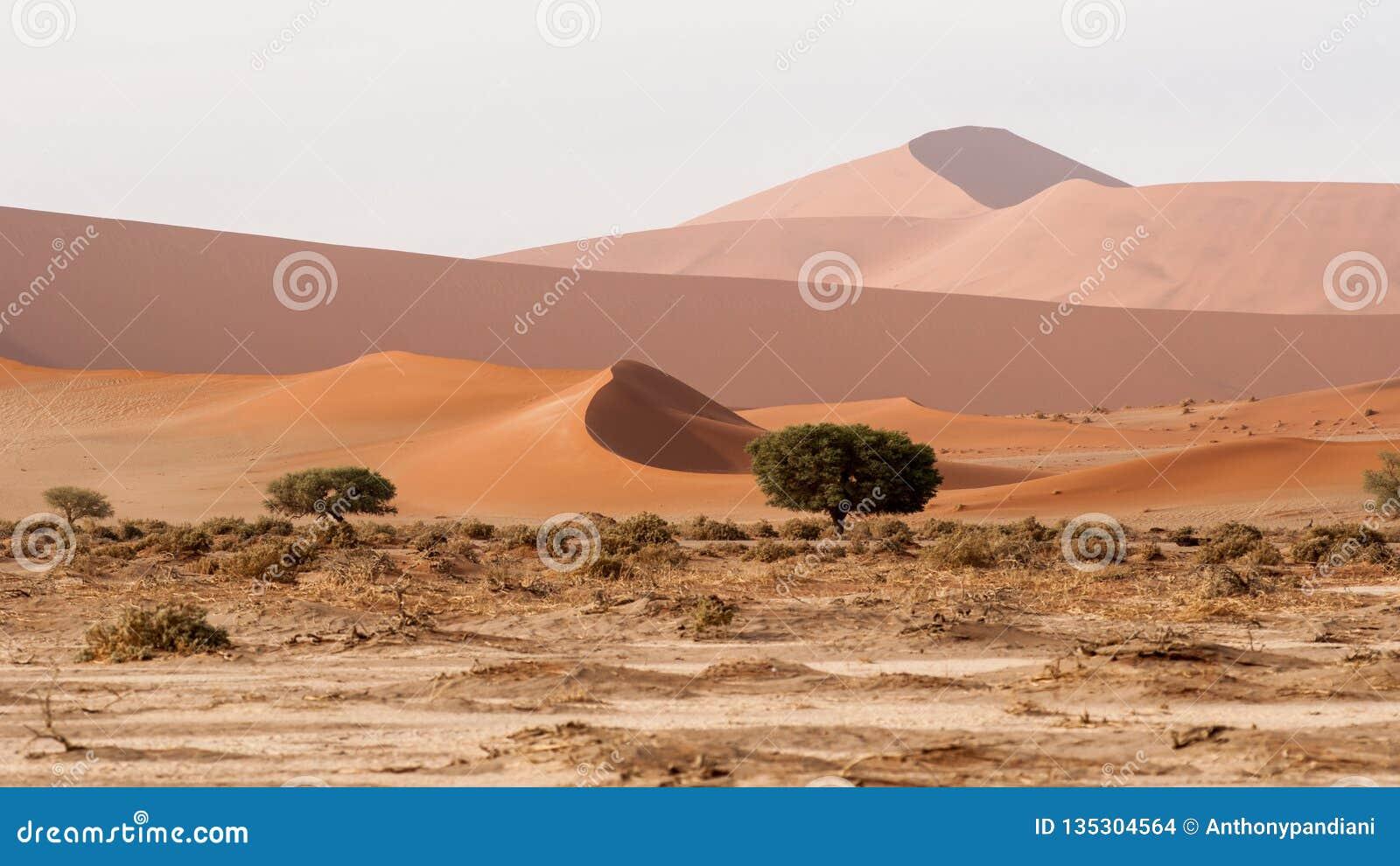 Ansicht der Namib-Dünen