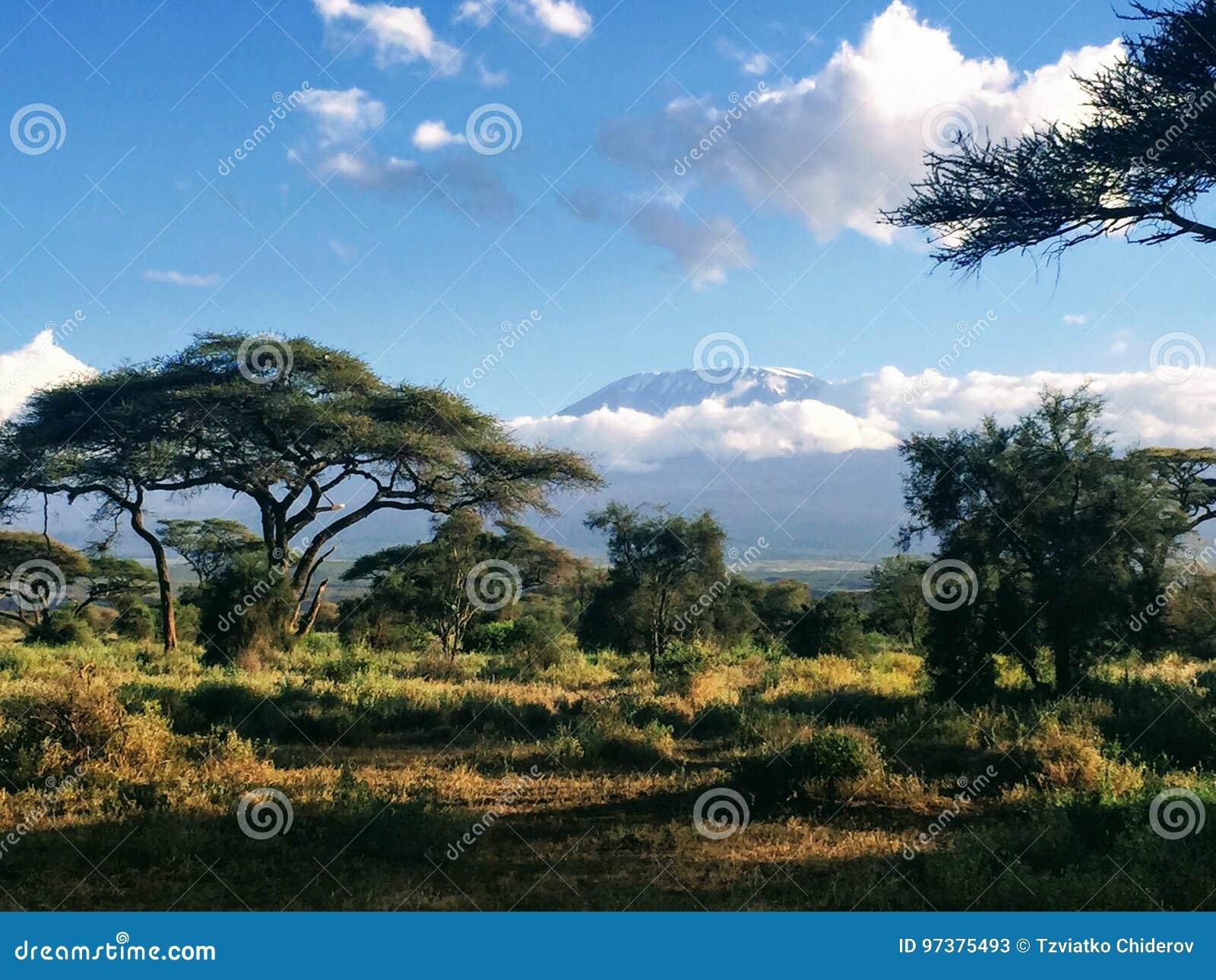 Ansicht des Mount Kilimanjaros von Nationalpark Amboseli in Kenia
