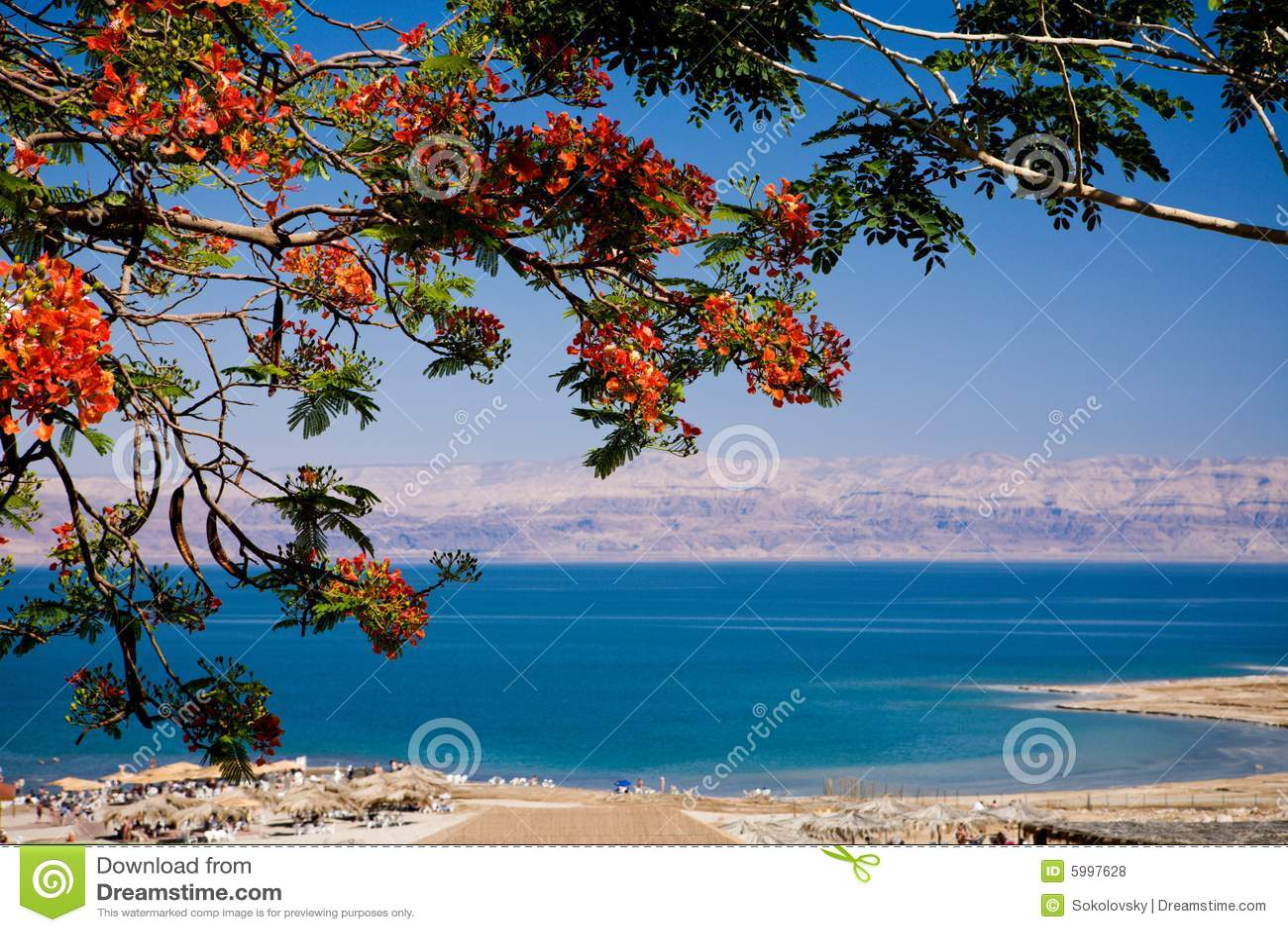 Ansicht des Toten Meers, Israel