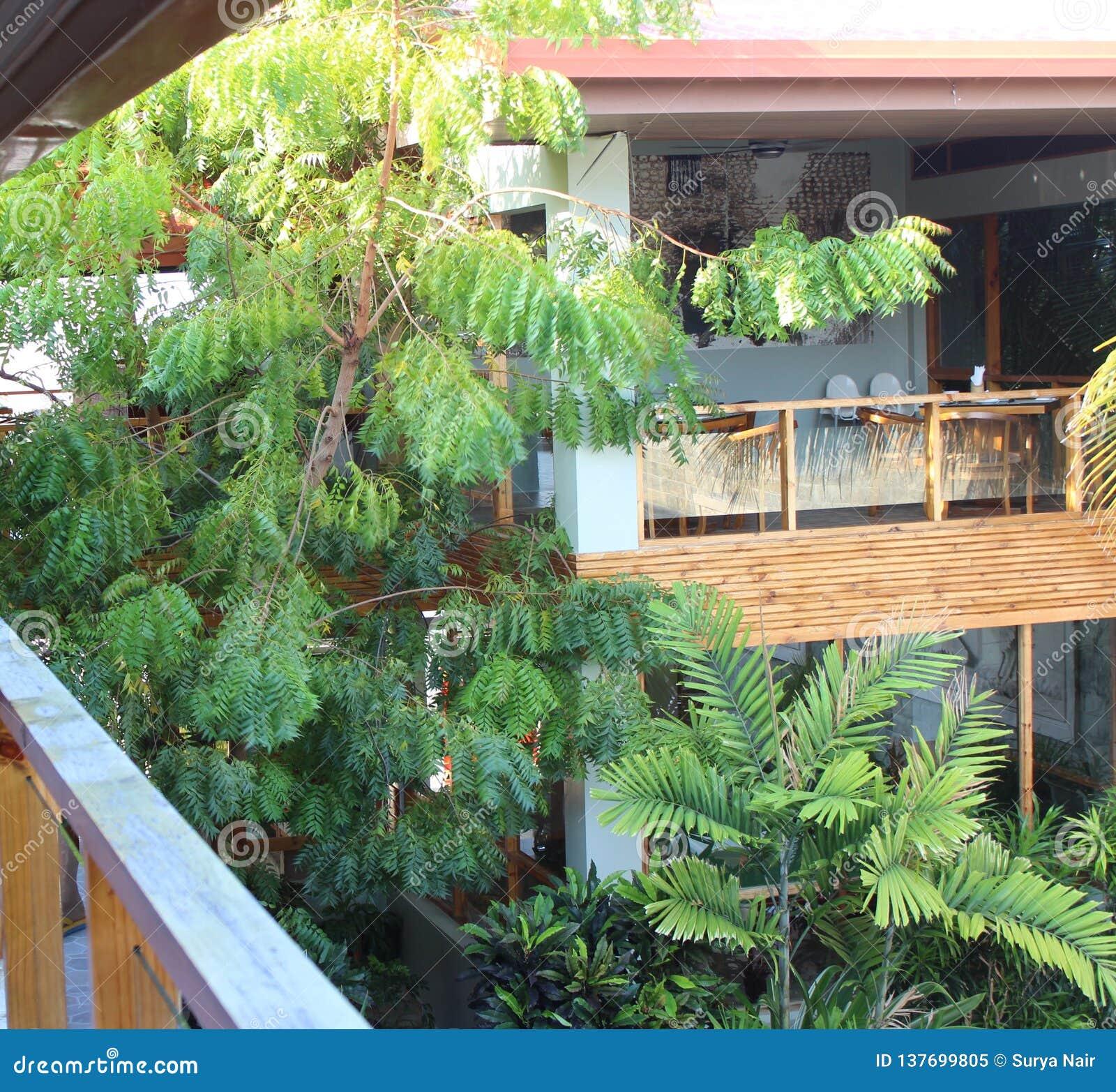 Ansicht vom Balkon, von der Terrasse, die im Hof übersehen und von einem Restaurant, das Bäume und Büsche hat