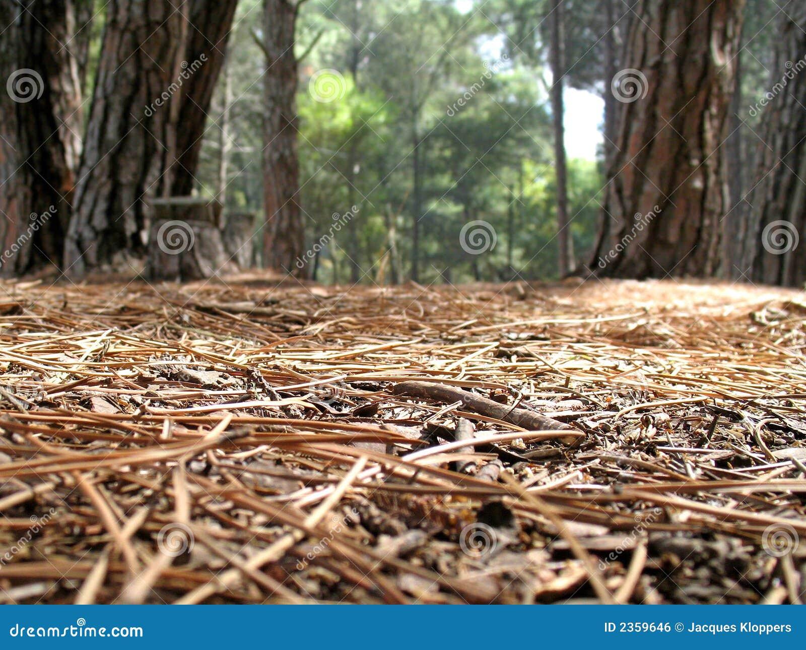 Ansicht vom Waldfußboden