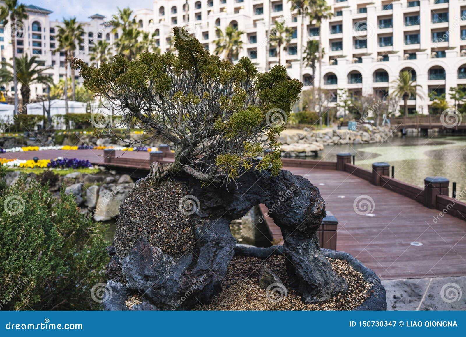 Ansicht von Lotte Hotel Jeju