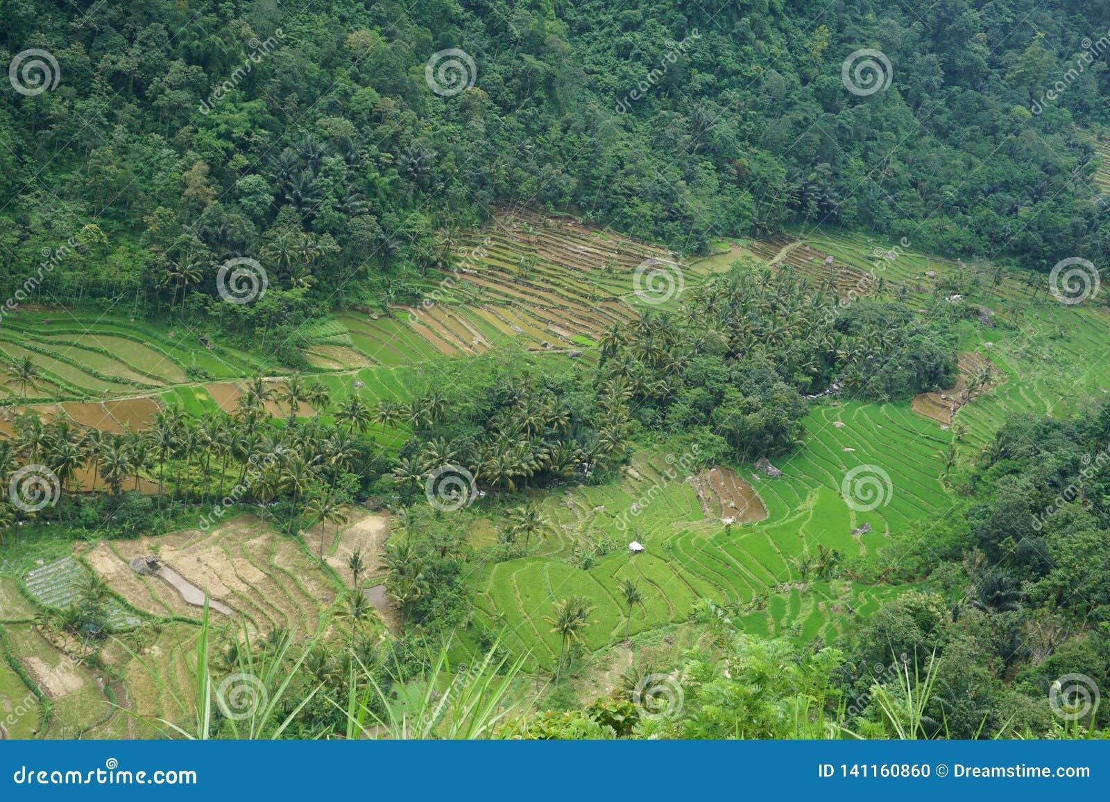 Ansichten von terassenförmig angelegten Reisfeldern