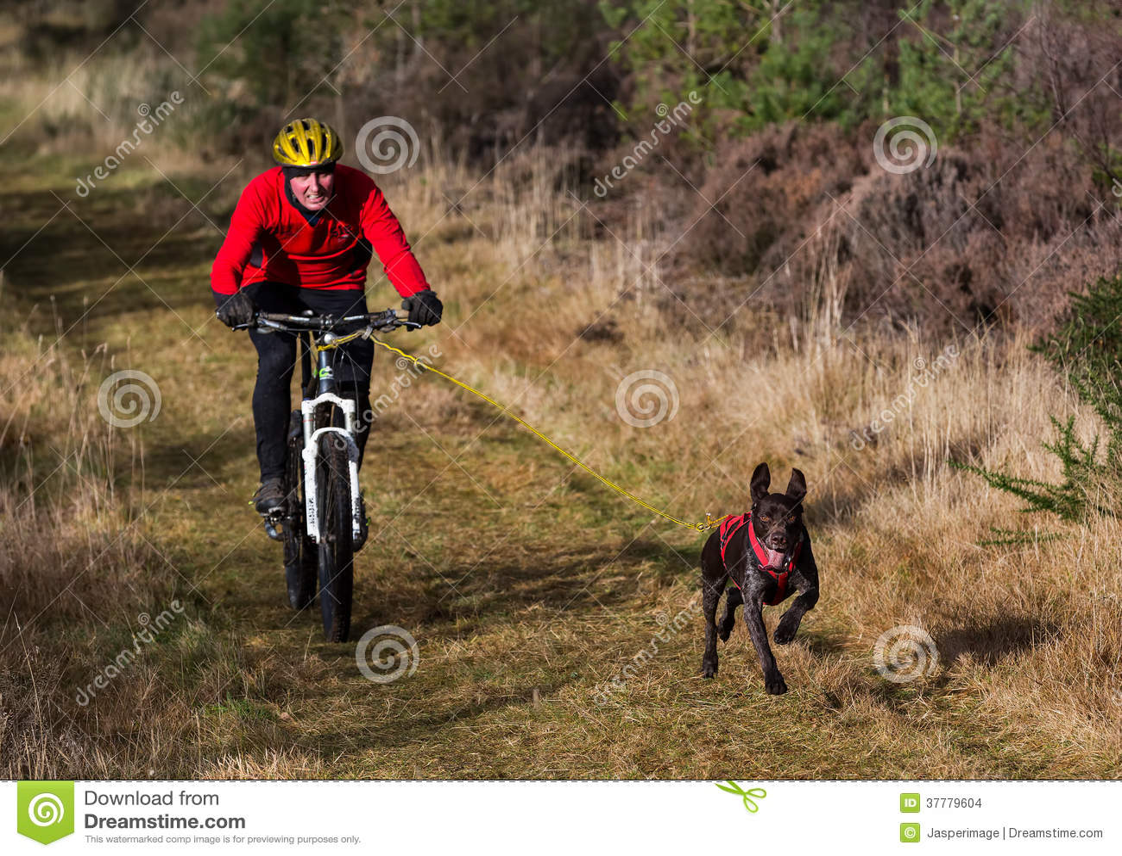 Anslutning Skottland, loppdeltagare för slädehund.