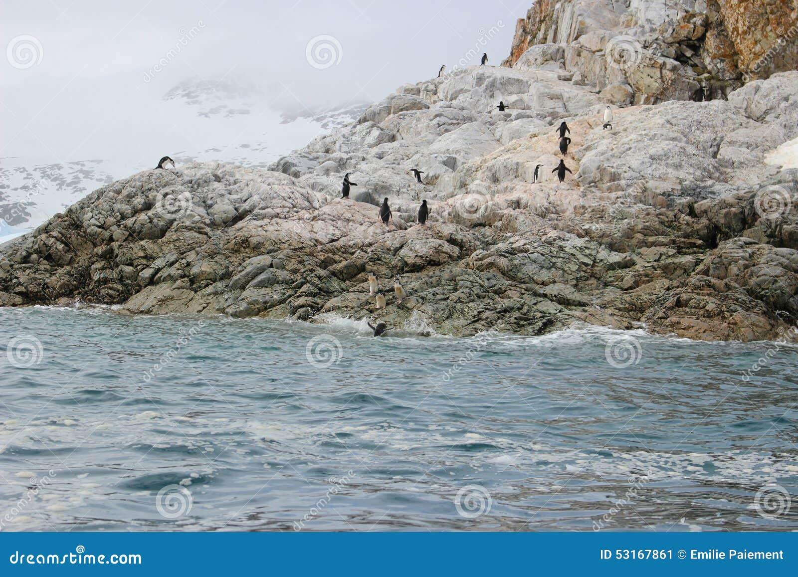A Antártica - pinguins
