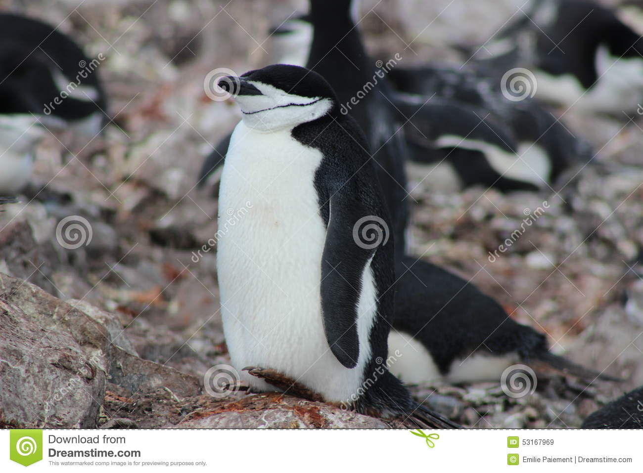 A Antártica - pinguins