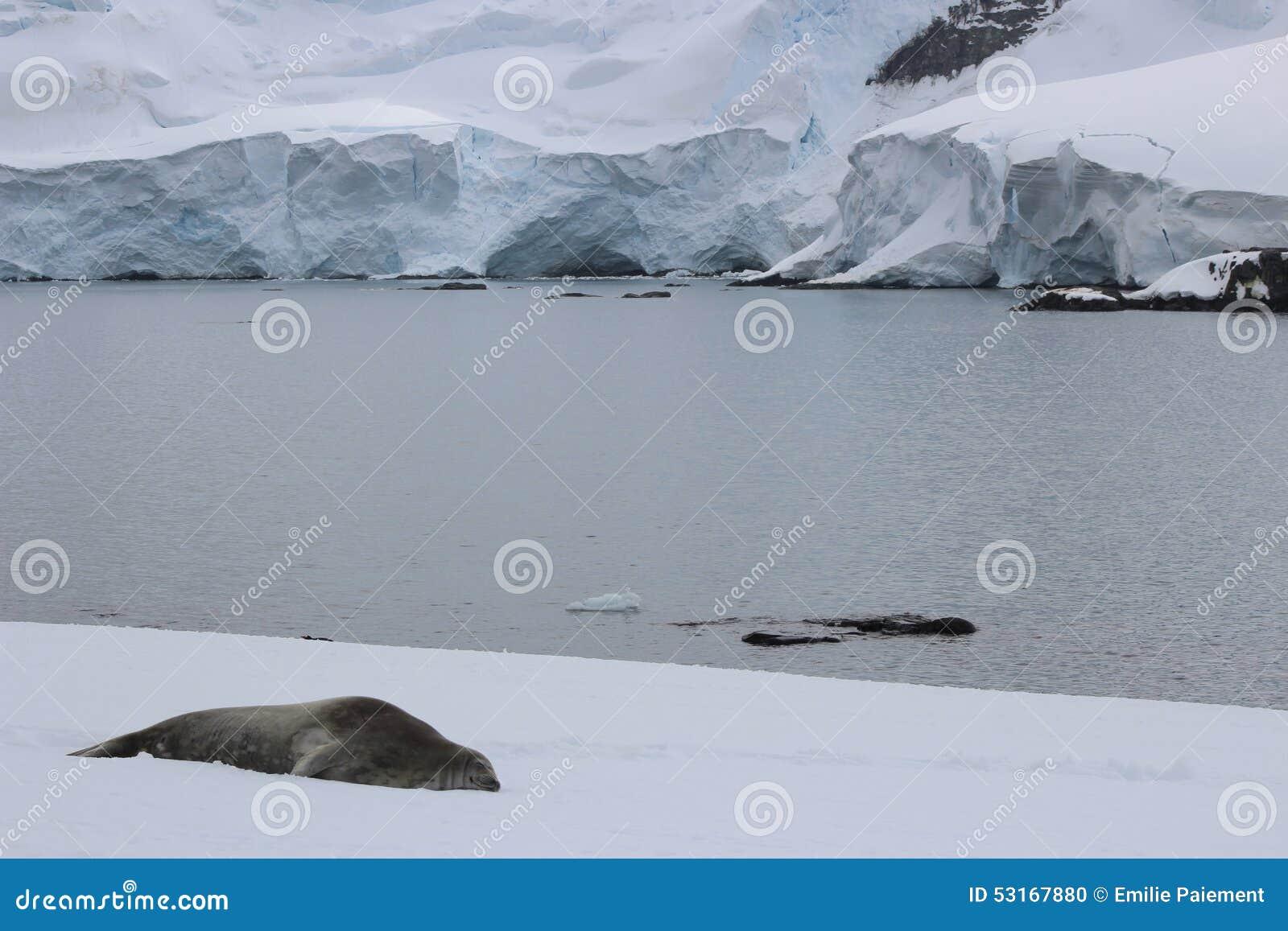 A Antártica - selos