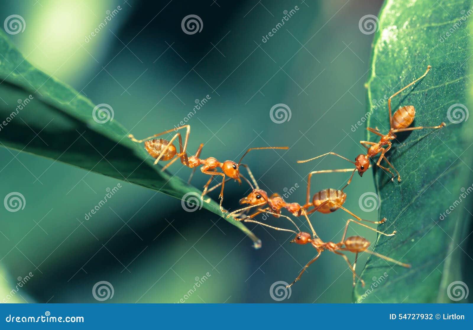 Unity In Nature Ant Bridge Unity Stock...