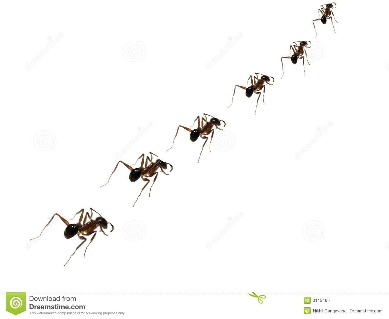 ant discipline royalty free stock image image 3115466 free honey bee clip art to download free honey bee vector clipart