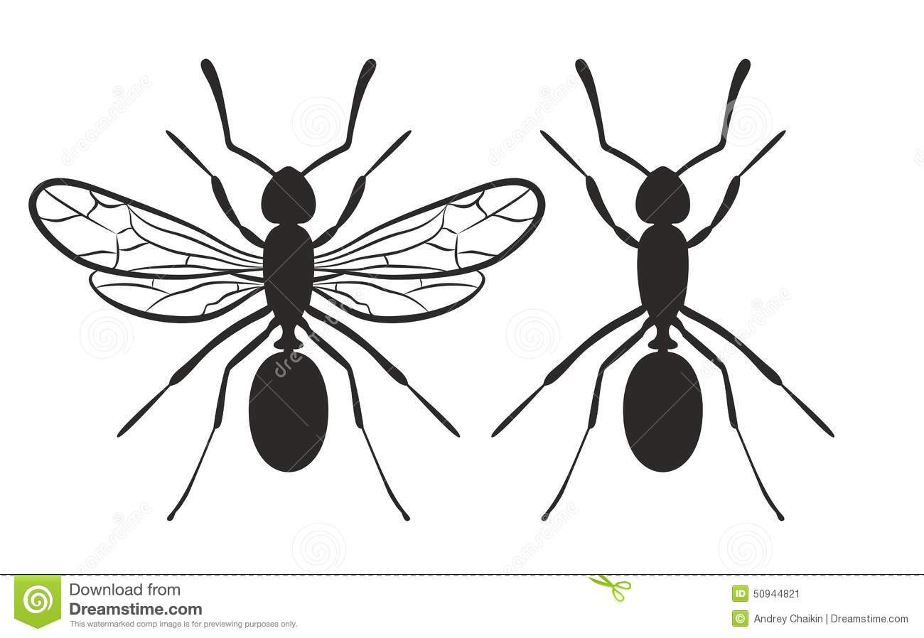 Ant Stock Vector Image 50944821