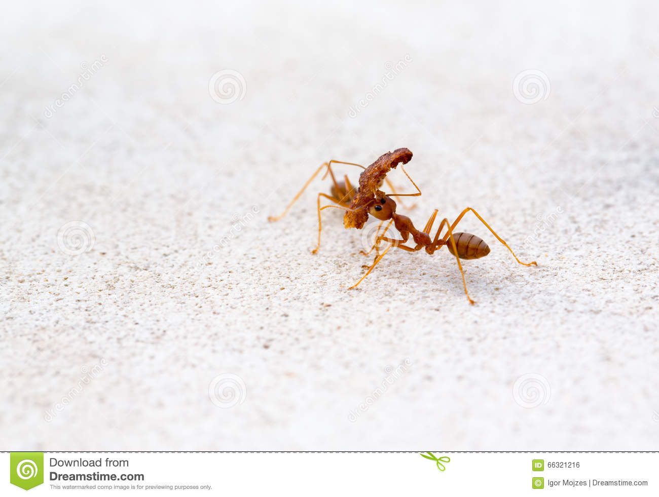 Ants Carrying Heavy Things