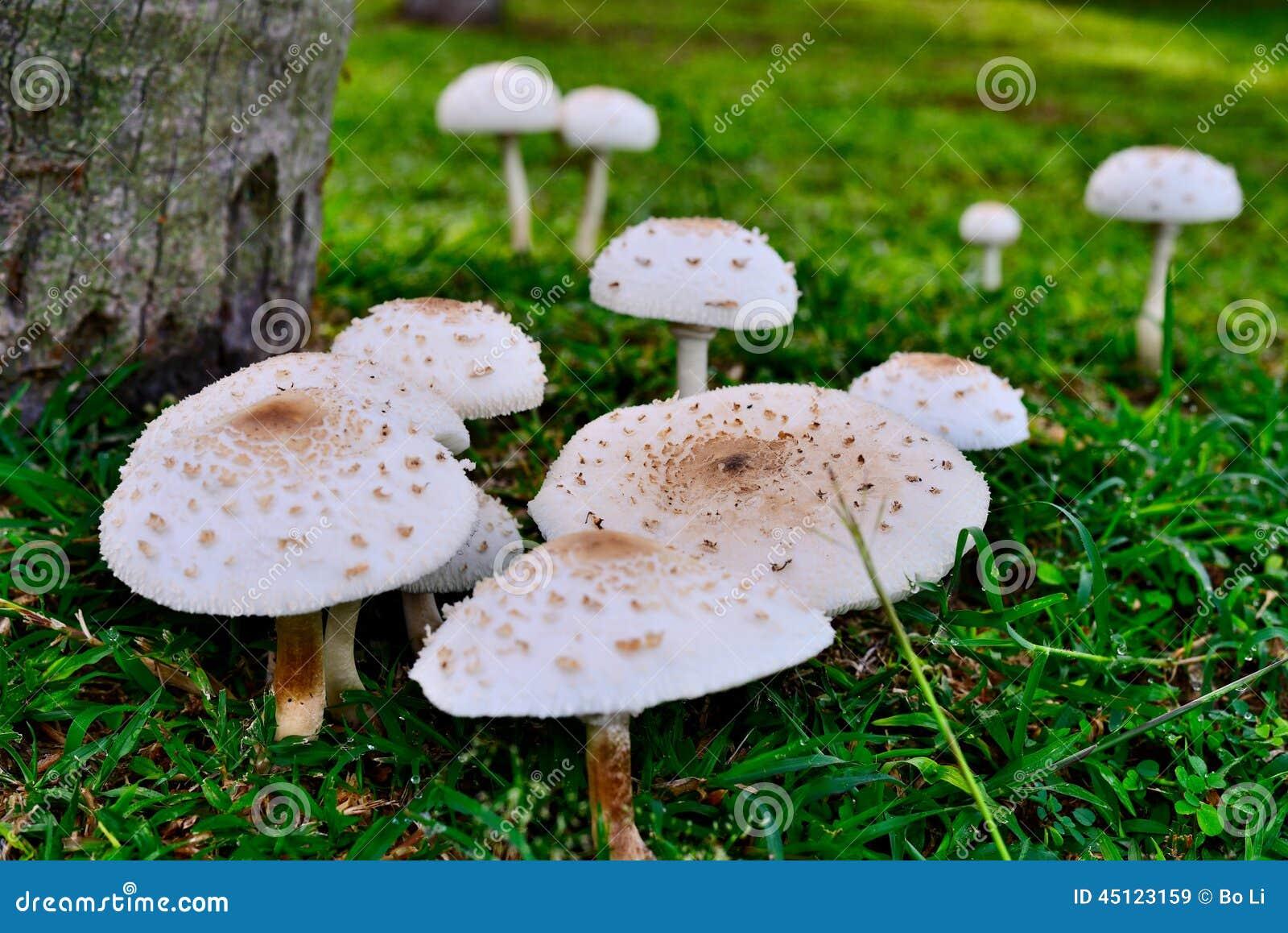 Ant and Mushroom