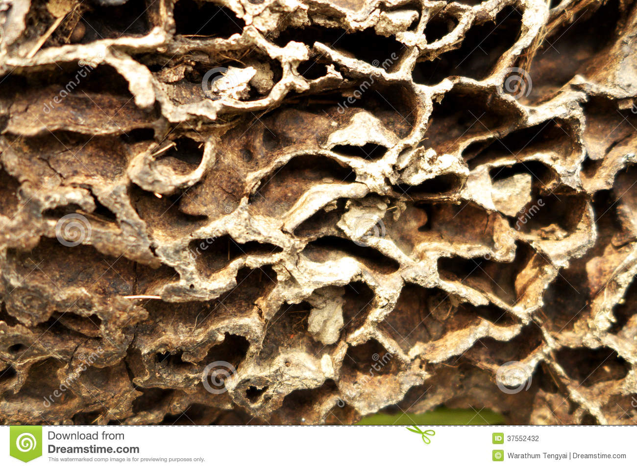 Ant Nest Background Stock Photography - Image: 37552432