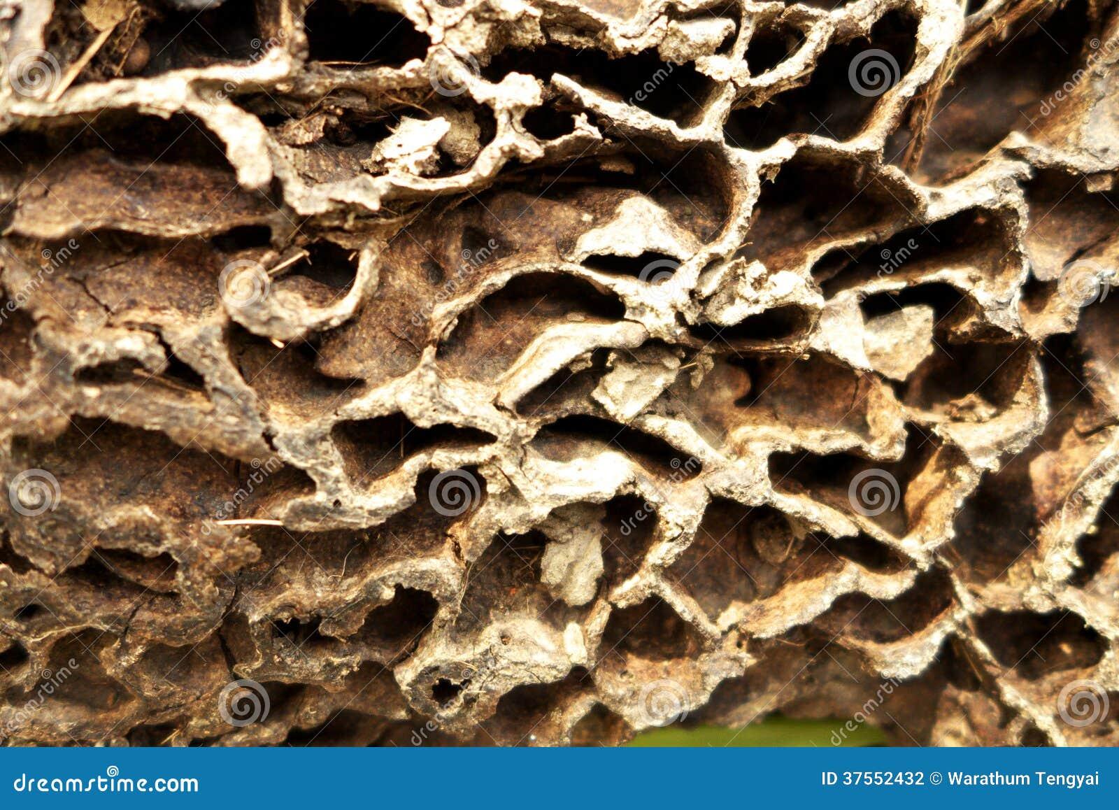 Ant Nest Background Stock Photography - Image: 37552432