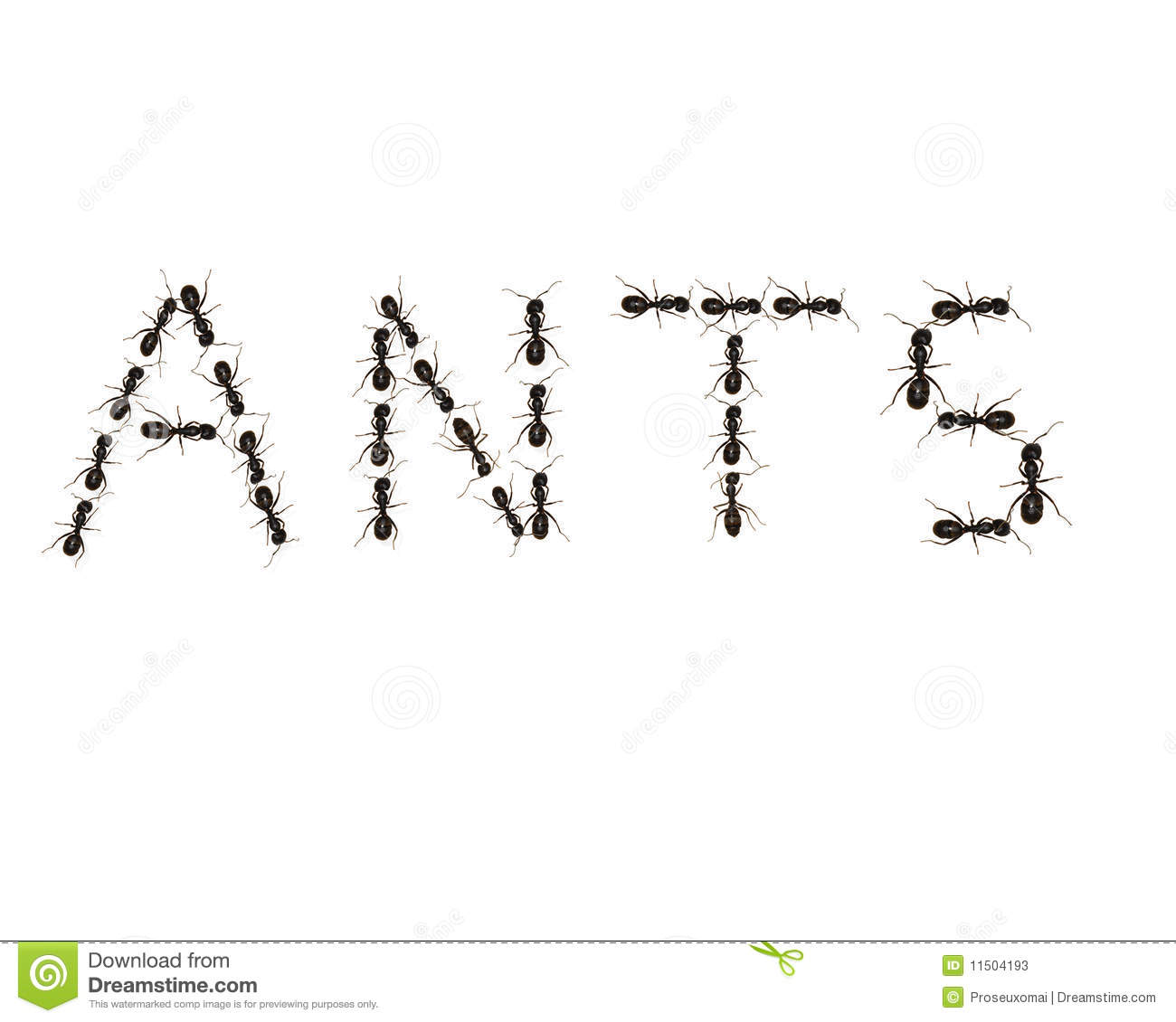Ants are crawling over a white background forming the word ANTS.