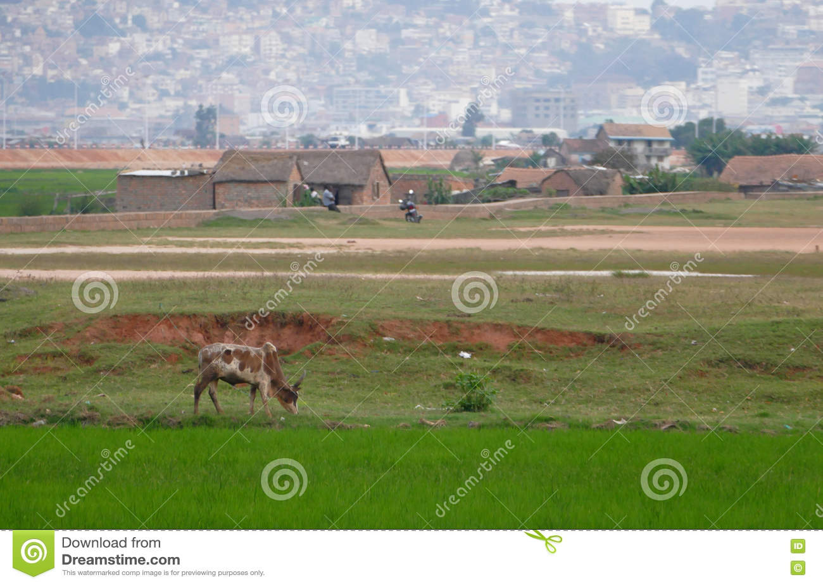 Antananarivo madagascar NOVEMBER 24TH 2016: Risfält i tokigt