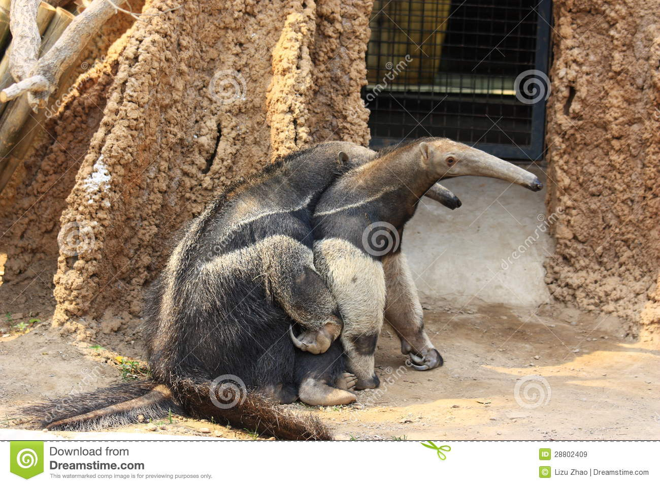 Anteaters Mating Royalty Free Stock Images - Image 28802409-3355