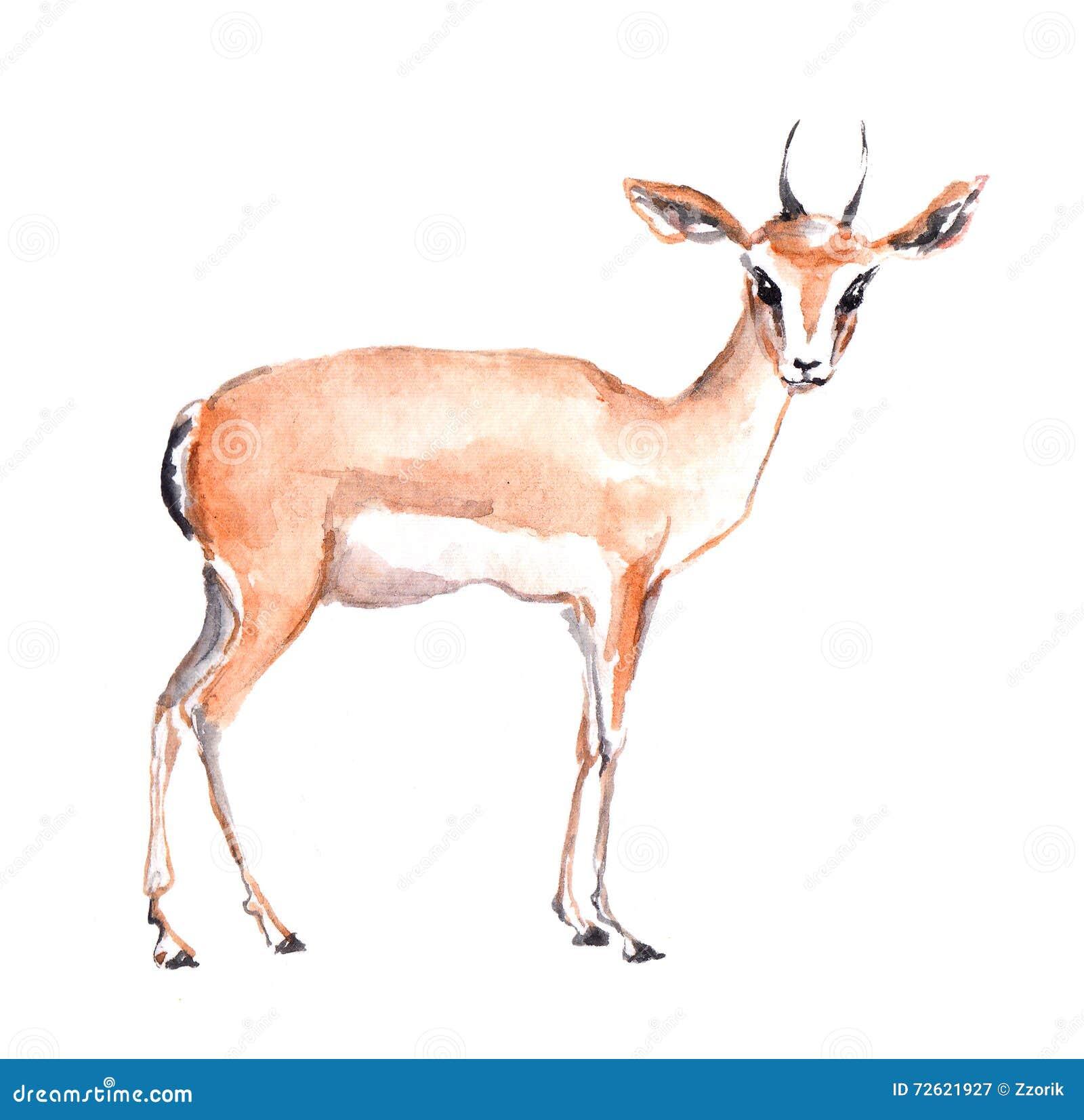 Antelope Animal. Watercolor Stock Illustration