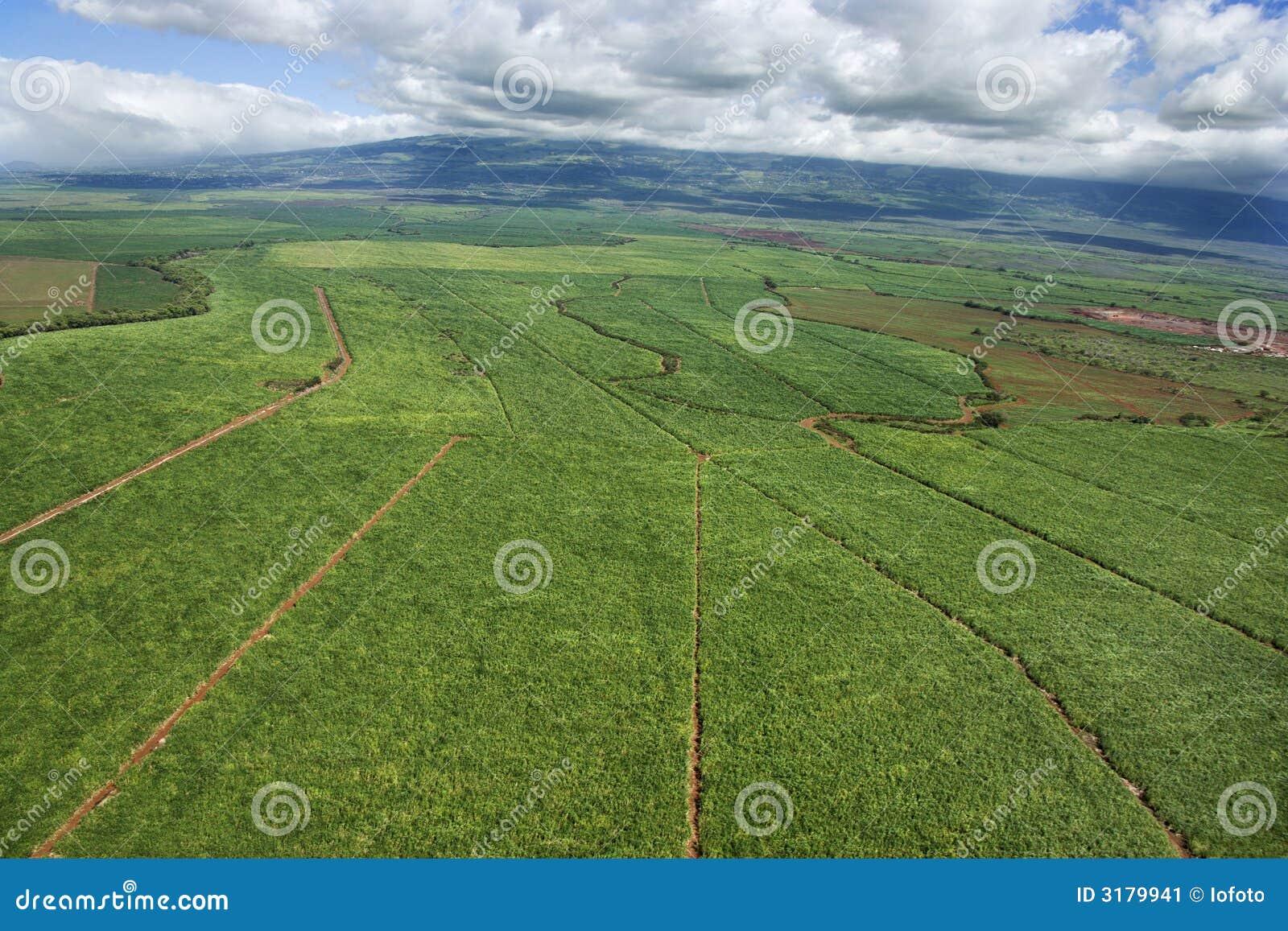 Antena del cropland irrigado.