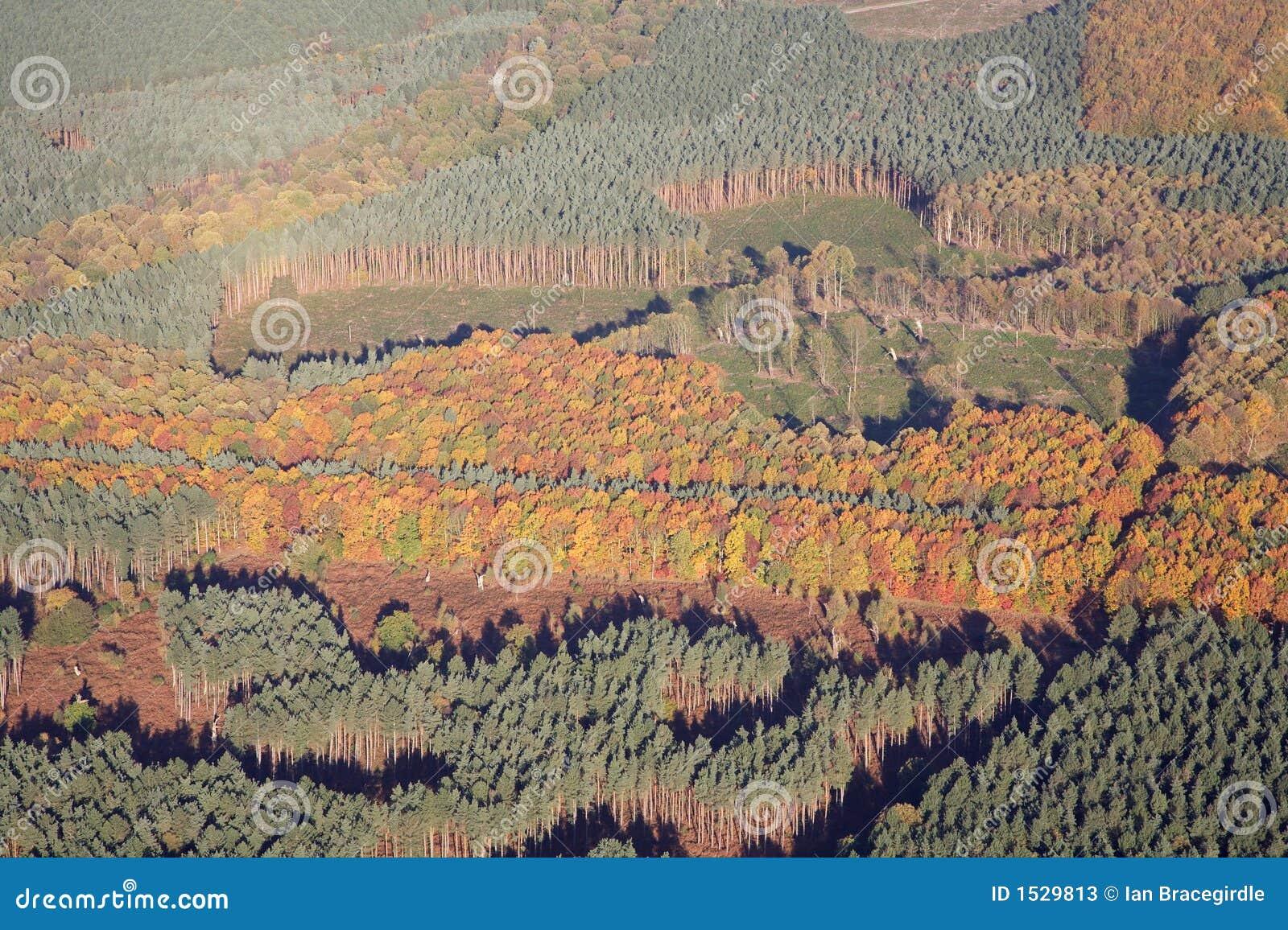Antenna della foresta di sherwood immagine stock for Pianta della foresta di pioppo