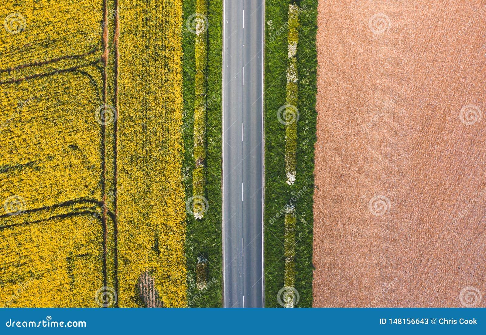 Antenne die VAN smalle weg tussen zonnig groen gras, raapzaad wordt geschoten